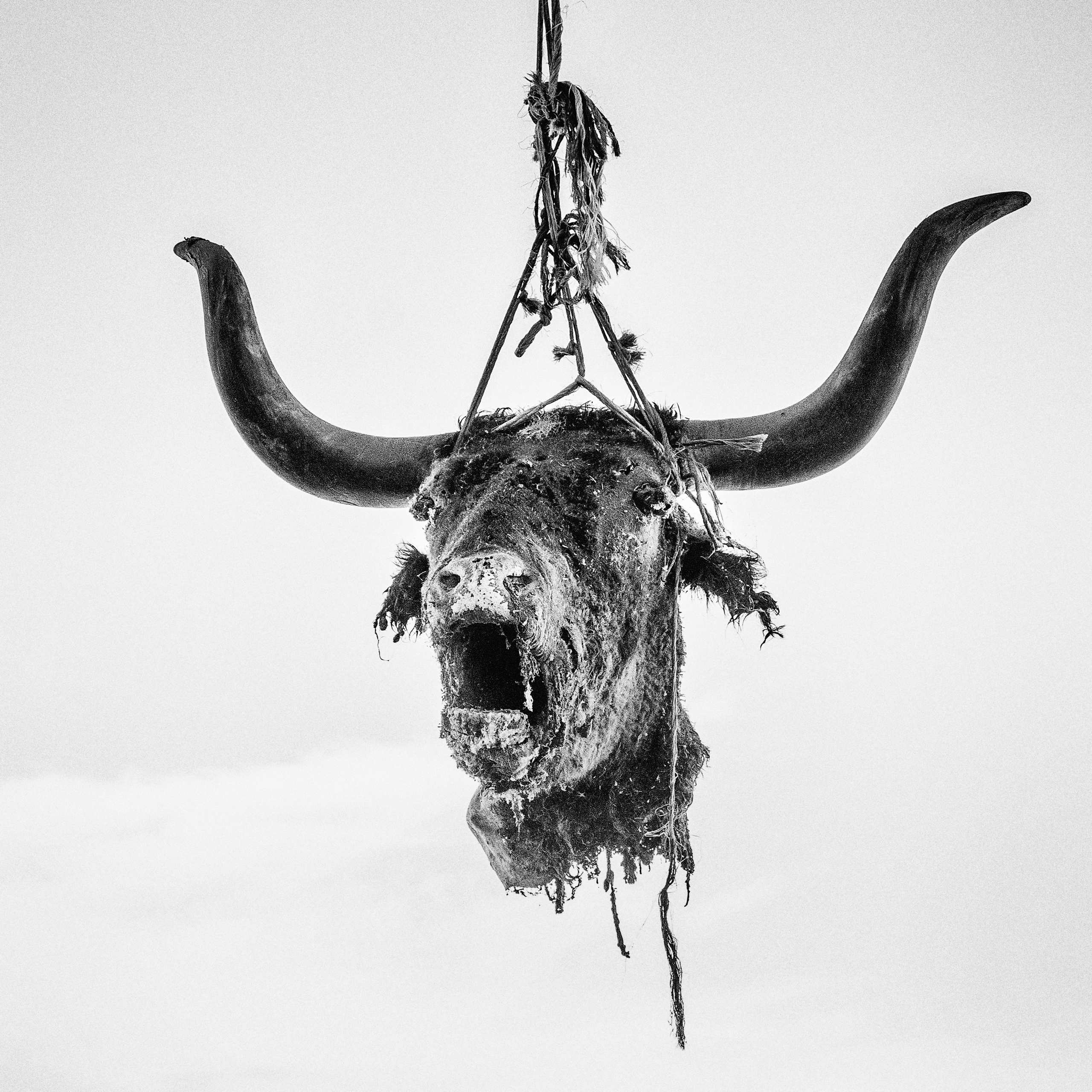 "The head of a dead bull hung to dry near Firebaugh, CA.  ""California's gonna die,"" a rancher describing the drought said. ""This whole valley's going to blow away like dust."""
