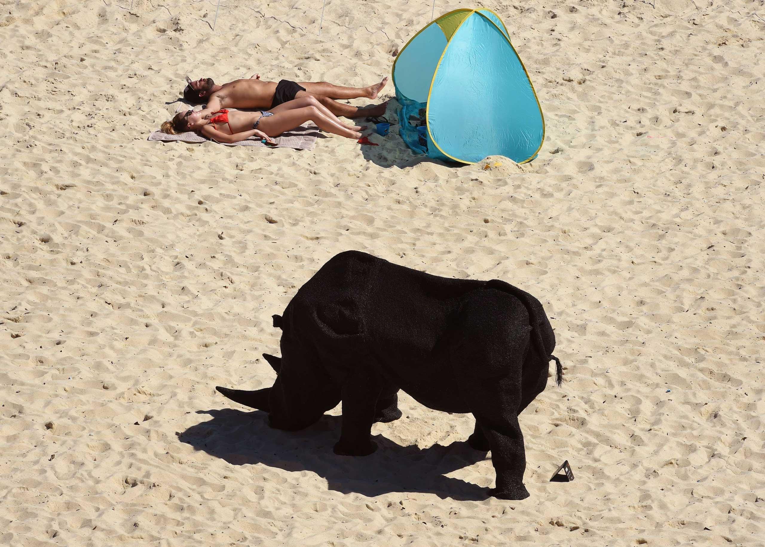 A couple sunbathe near a rhinoceros sculpture by Australian artist Mikaela Castledine on Sydney's Tamarama Beach, Oct. 23, 2014.