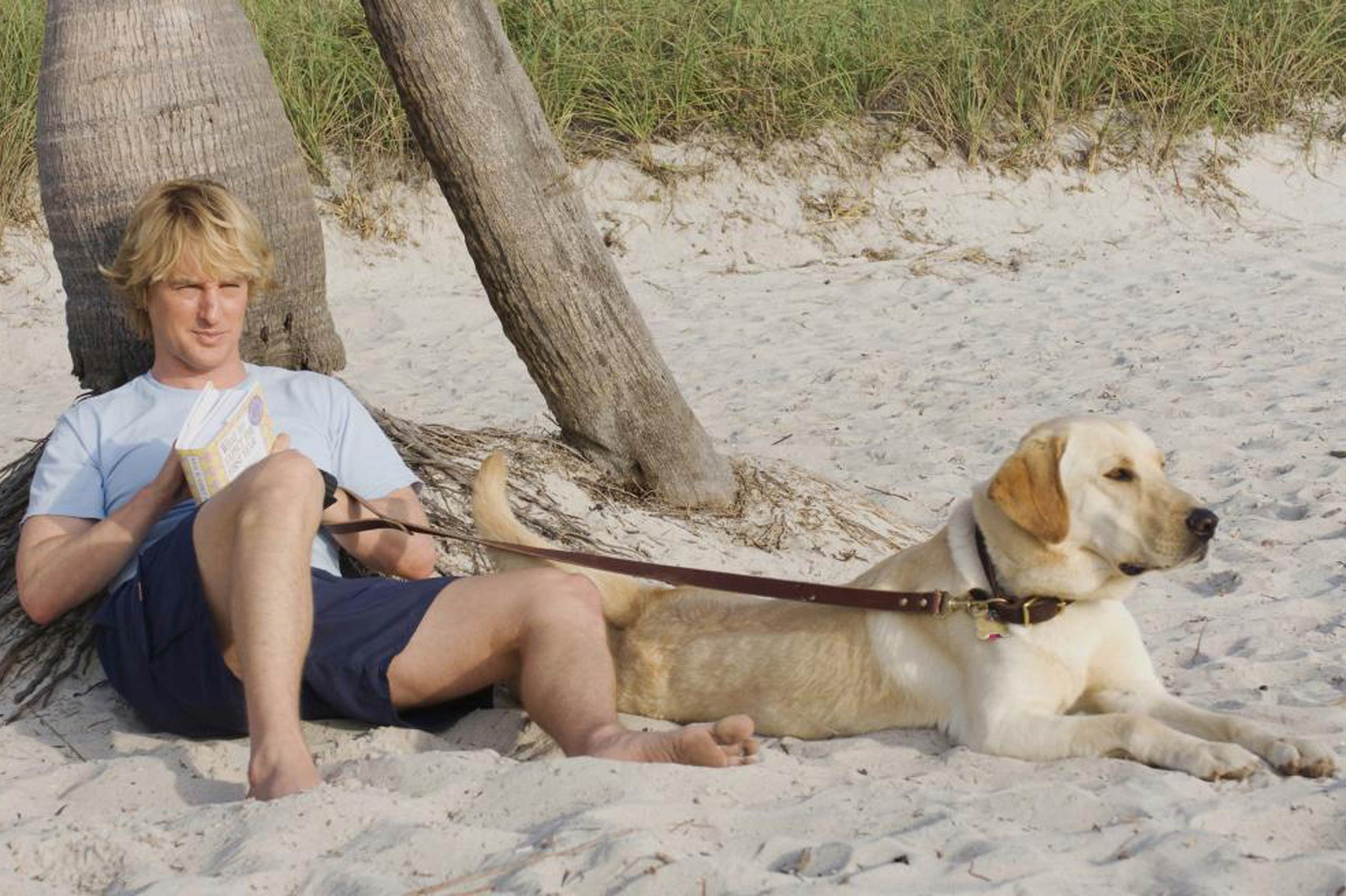 Marley & Me (NBC)                                                              Though the Marley & Me movie may have been a tear-jerker, the proposed TV show will be a comedy. Picking up where the film left off, John, Jenny and their three children will be forced to adopt a new stray puppy — whom they name Marley, of course.