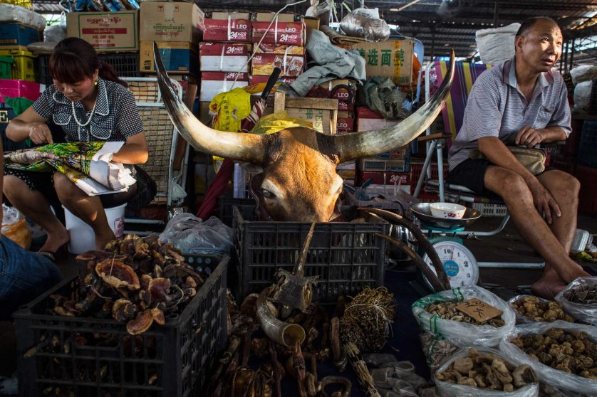 A wildlife animal product shop in the market of Mong La, Shan State, Myanmar, October 14, 2014. ( Photograph by Minzayar )