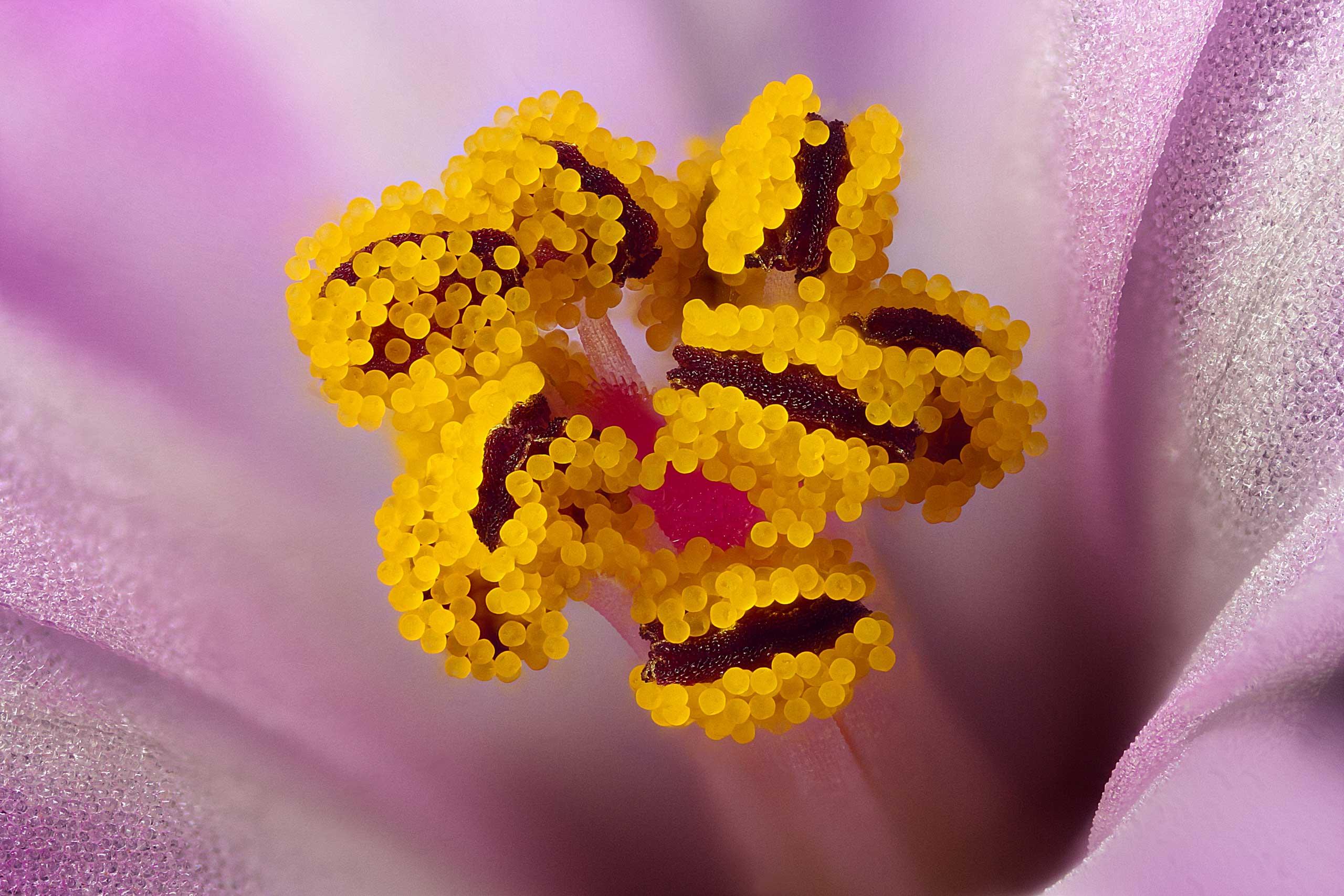 A geranium wildflower.