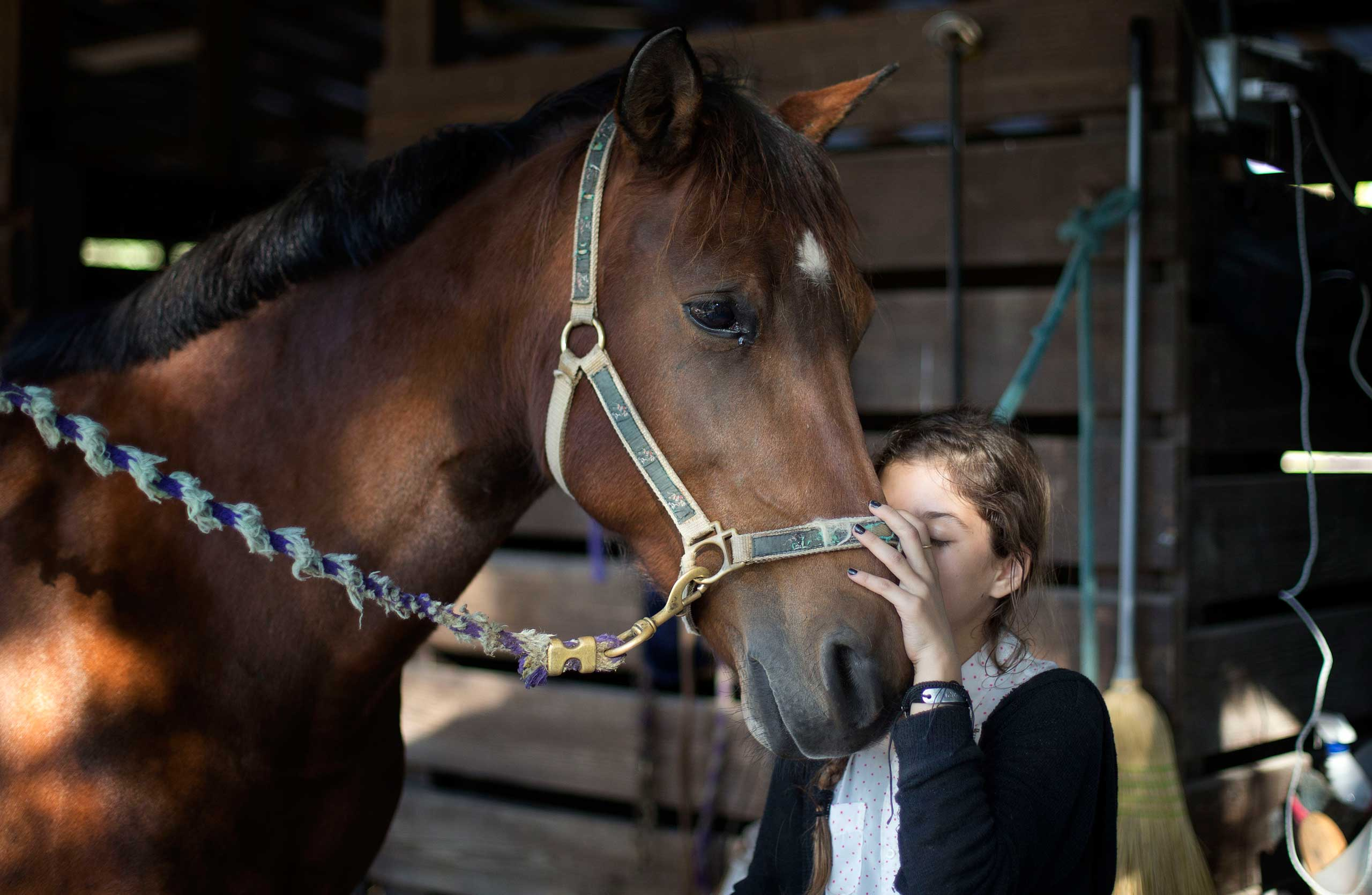 Dec. 16, 2014. Ava Exelbirt hugs one of the remaining horses at the Masterpiece Equestrian Center in Davie, Fla., Ava lost the horse she rode to contaminated feed. There's nothing that can be done to save 18 poisoned horses at a Florida equestrian center, so their young riders are holding  spa days  to brush their manes and tails, paint their hooves, feed them hay and pet their noses to keep the animals comfortable in their last days.