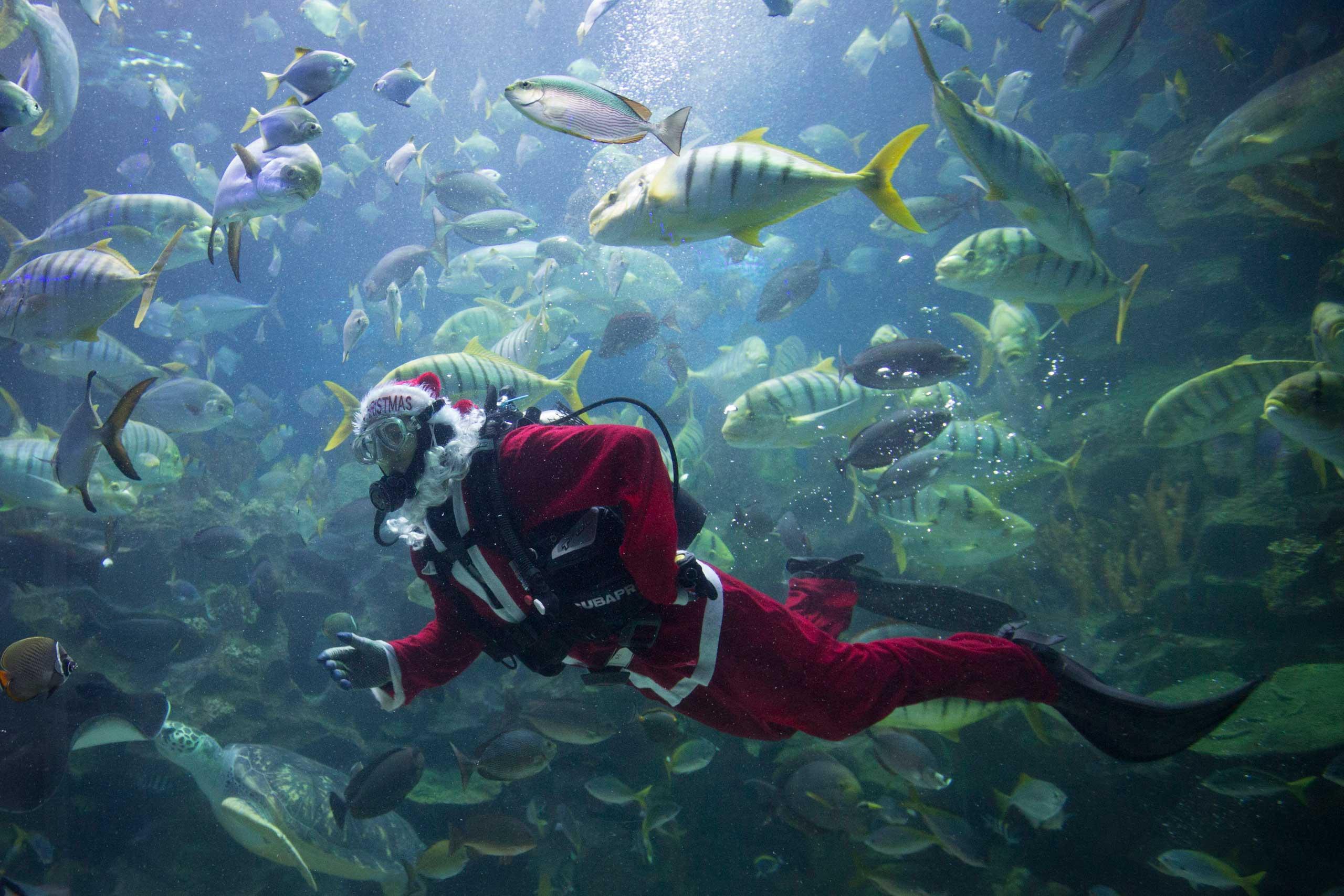 Dec. 16, 2014. A diver in Santa costume feeds fish as part of upcoming Christmas celebrations at Aquaria KLCC underwater park in Kuala Lumpur, Malaysia.