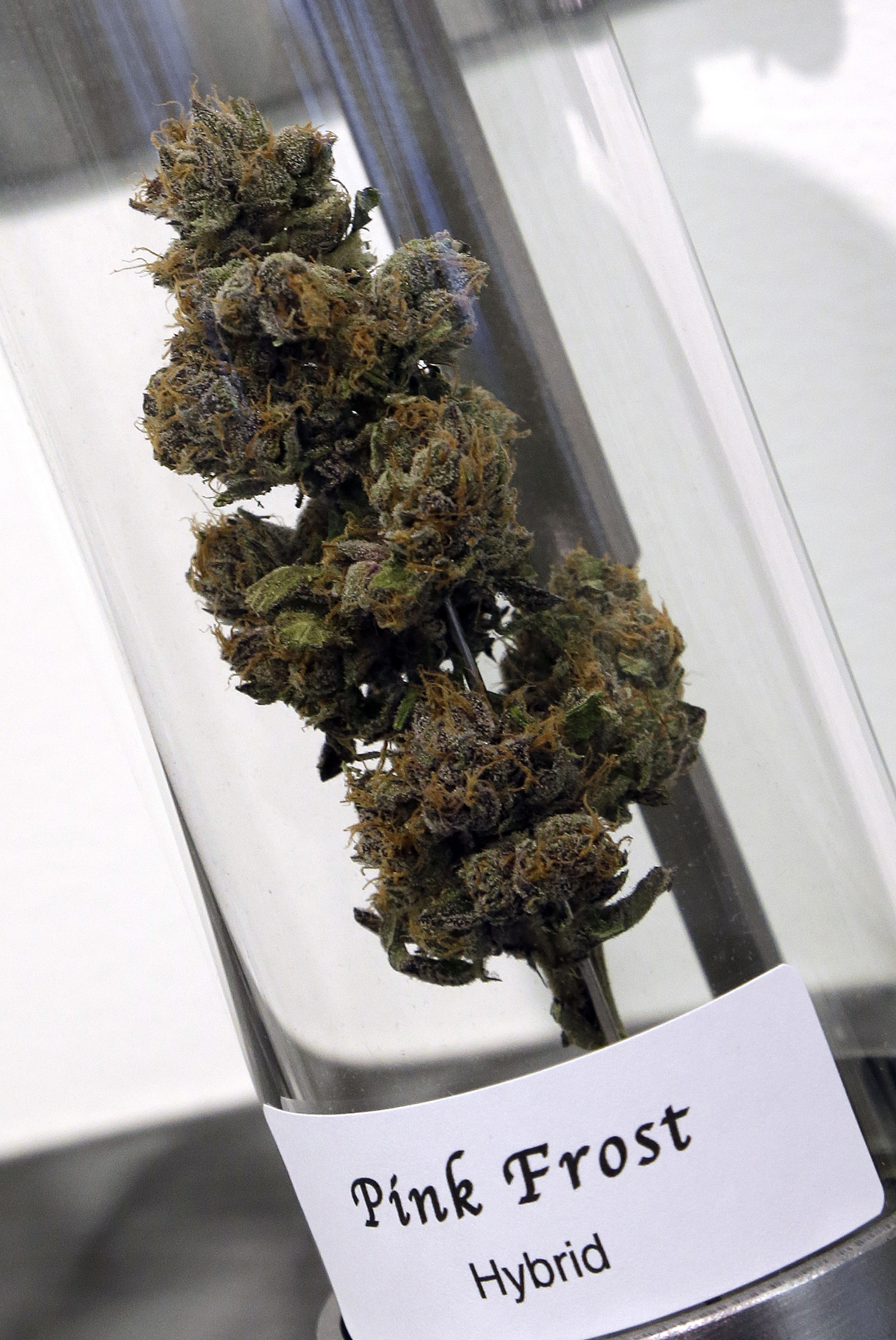A sample of cannabis appears on display at Shango Premium Cannabis dispensary in Portland, Ore.