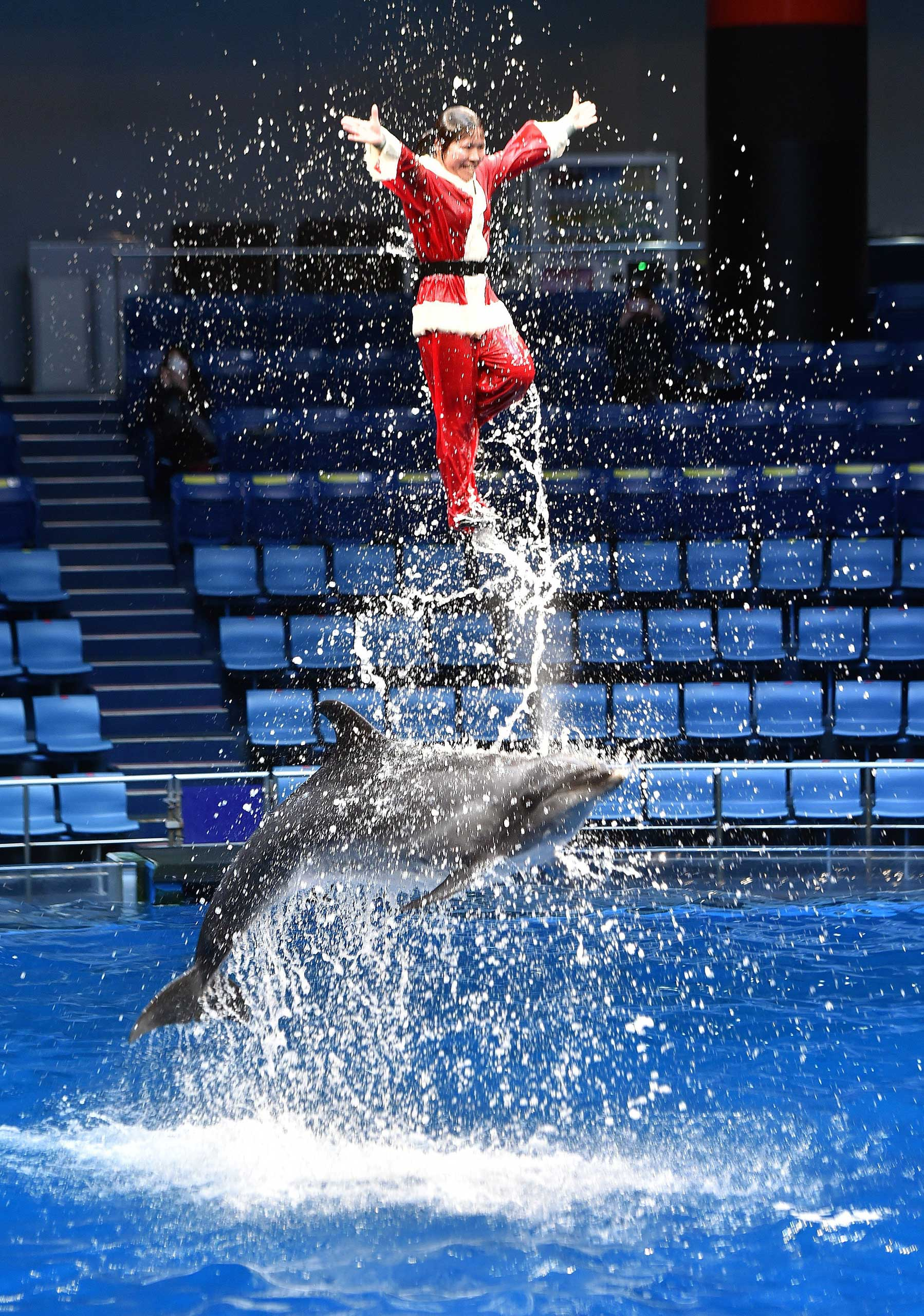 A trainer dressed as Santa Claus performs with a bottle-nose dolphin during a show at the Aqua Stadium aquarium in Tokyo on Dec. 22, 2014.