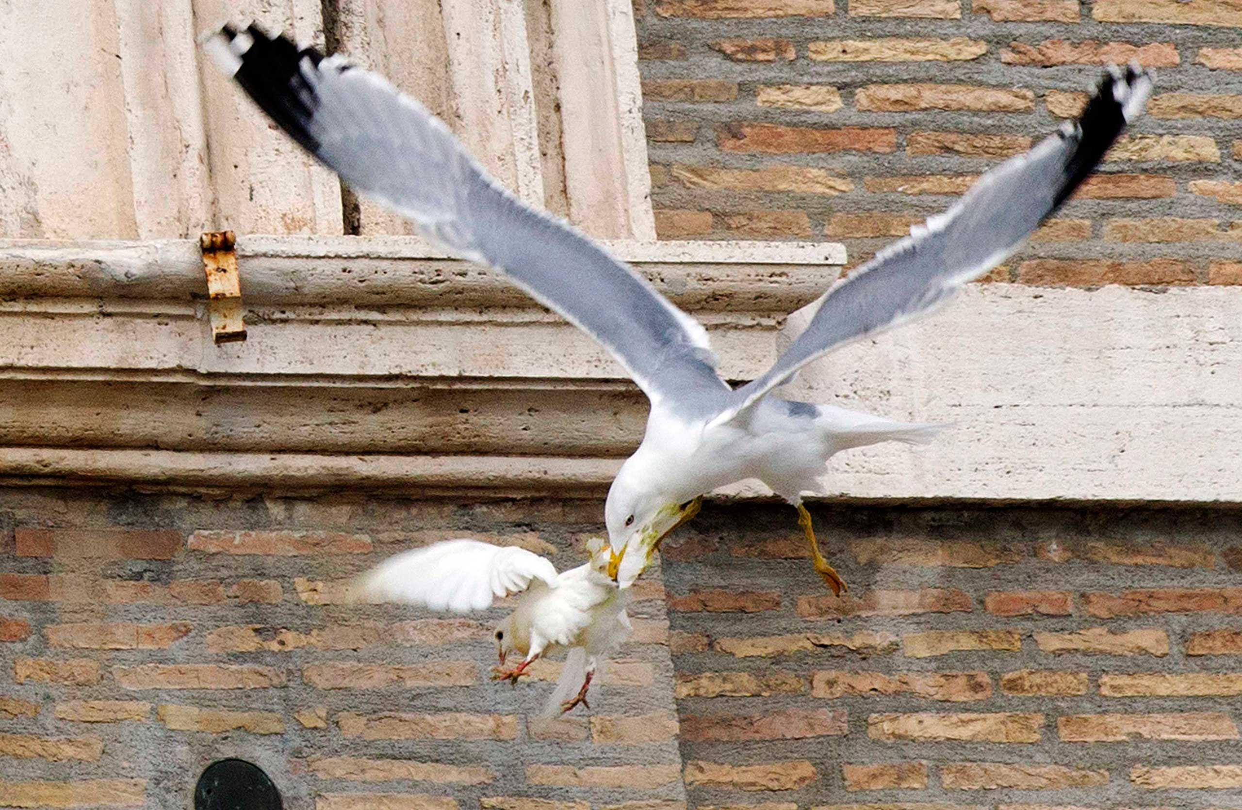 A dove released during an Angelus prayer conducted by Pope Francis, is attacked by a seagull in Saint Peter's square at the Vatican Jan. 26, 2014.