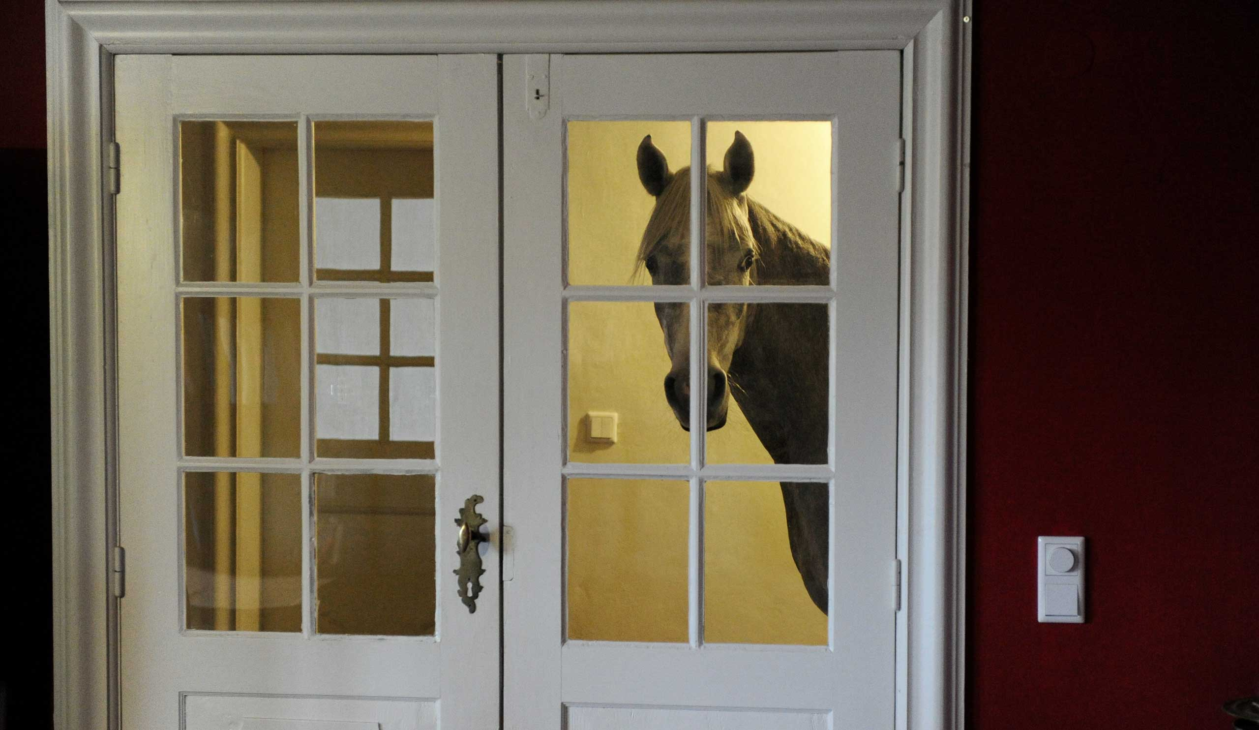 An Arabian horse stands in front of a living room door. After a powerful storm swept through northern Germany in December, Stephanie Arndt brought the horse, named Nasar, inside and he now regularly stays in the house, Holt, Germany, Feb. 10, 2014.