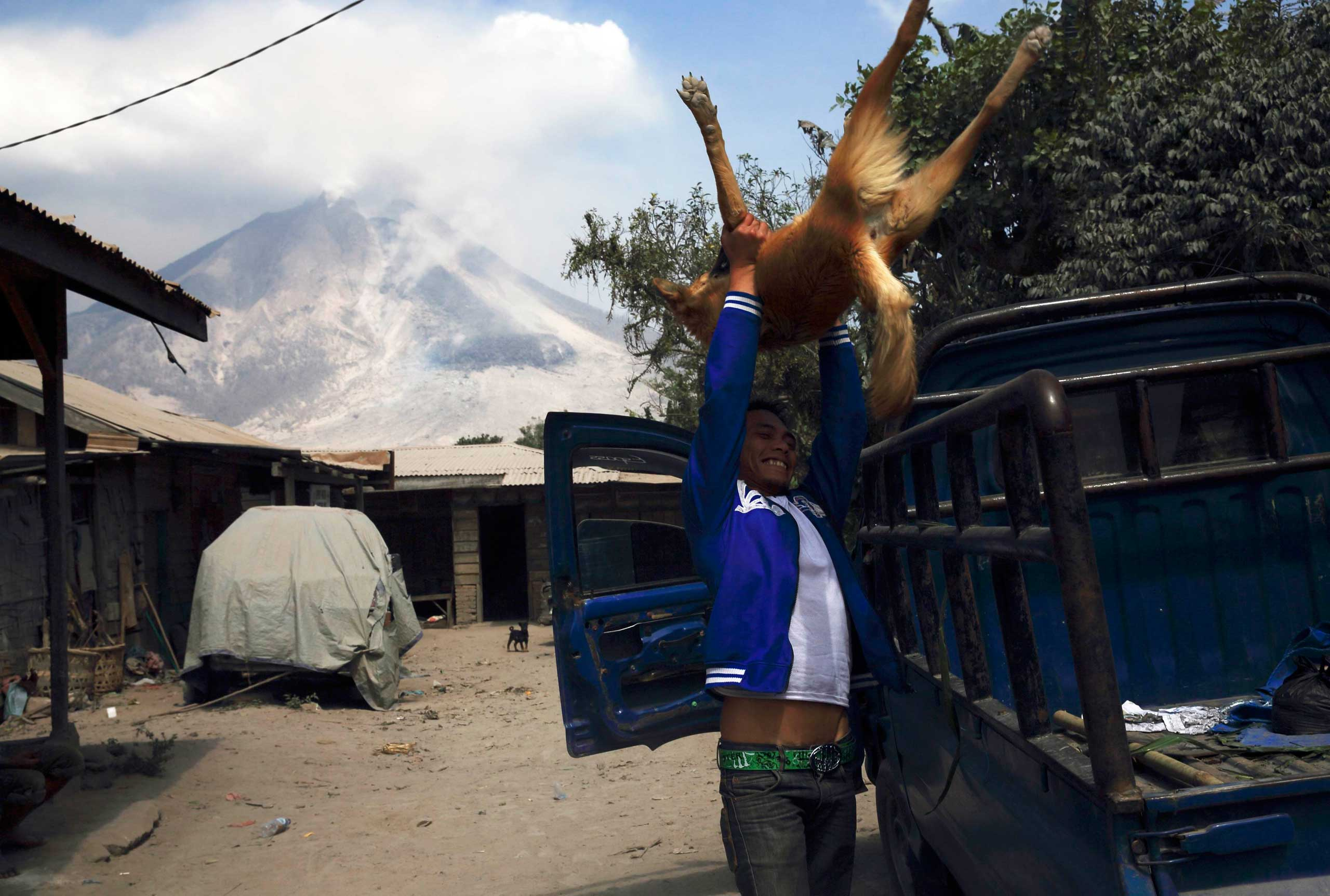 A villager lifts his dog onto a truck to evacuate as Mount Sinabung spews ash at Pintu Besi village in Karo district, North Sumatra province Feb. 5, 2014.