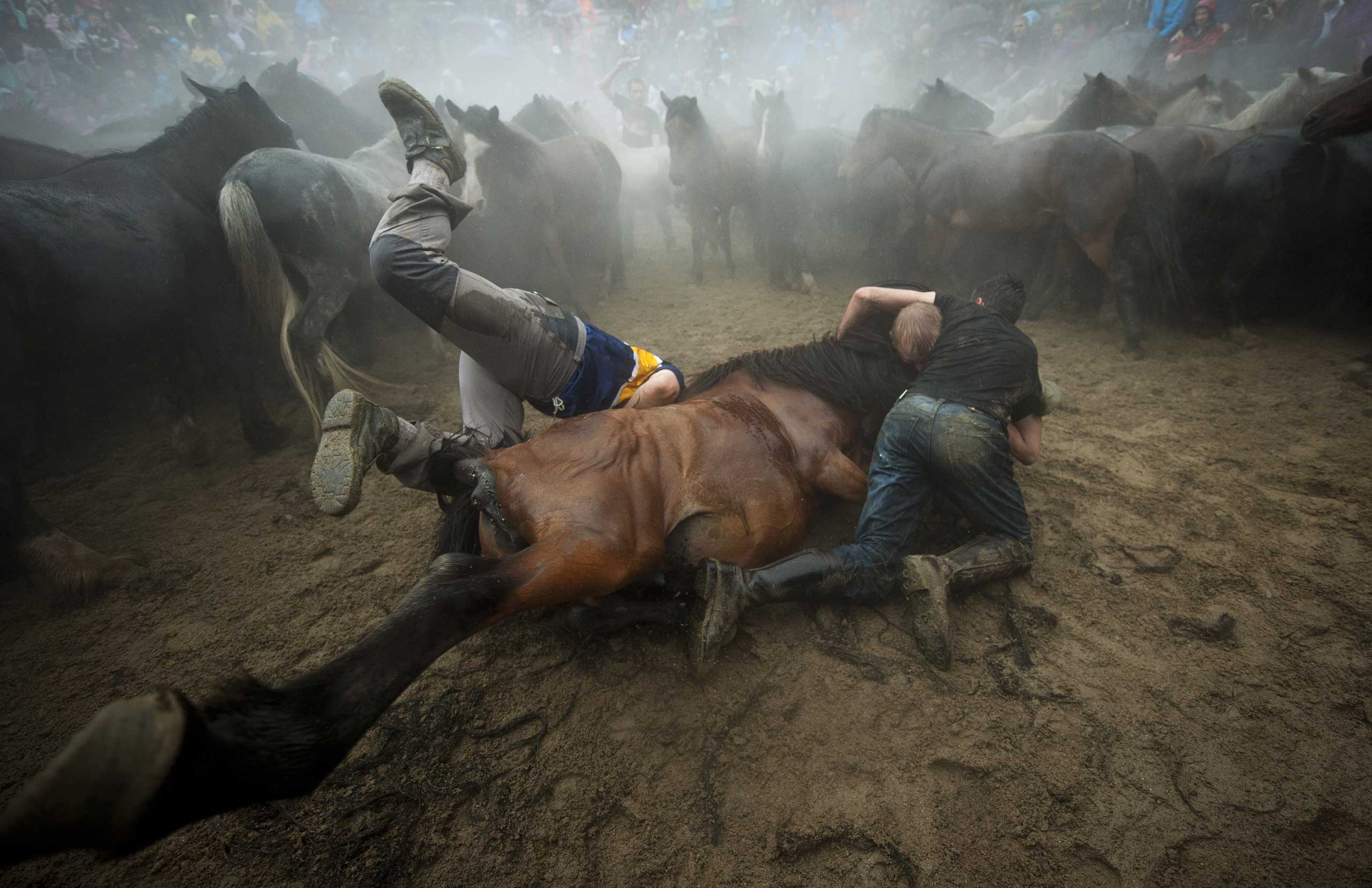 Fighters struggle with a wild horse during a traditional event in the Spanish village of Sabucedo,  July 5, 2014.
