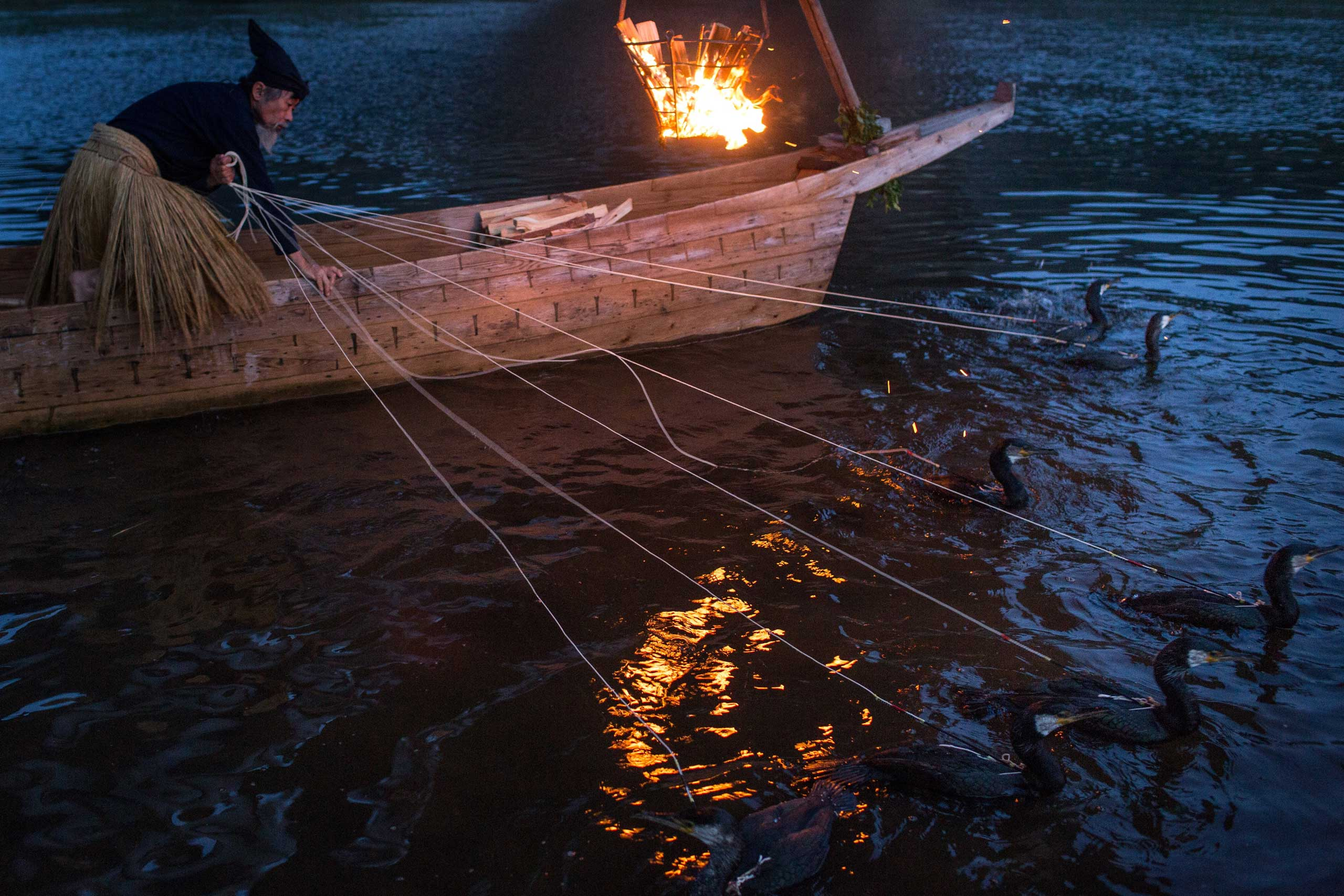 A cormorant master prepares sea cormorants in Gifu, Japan, July 2, 2014.