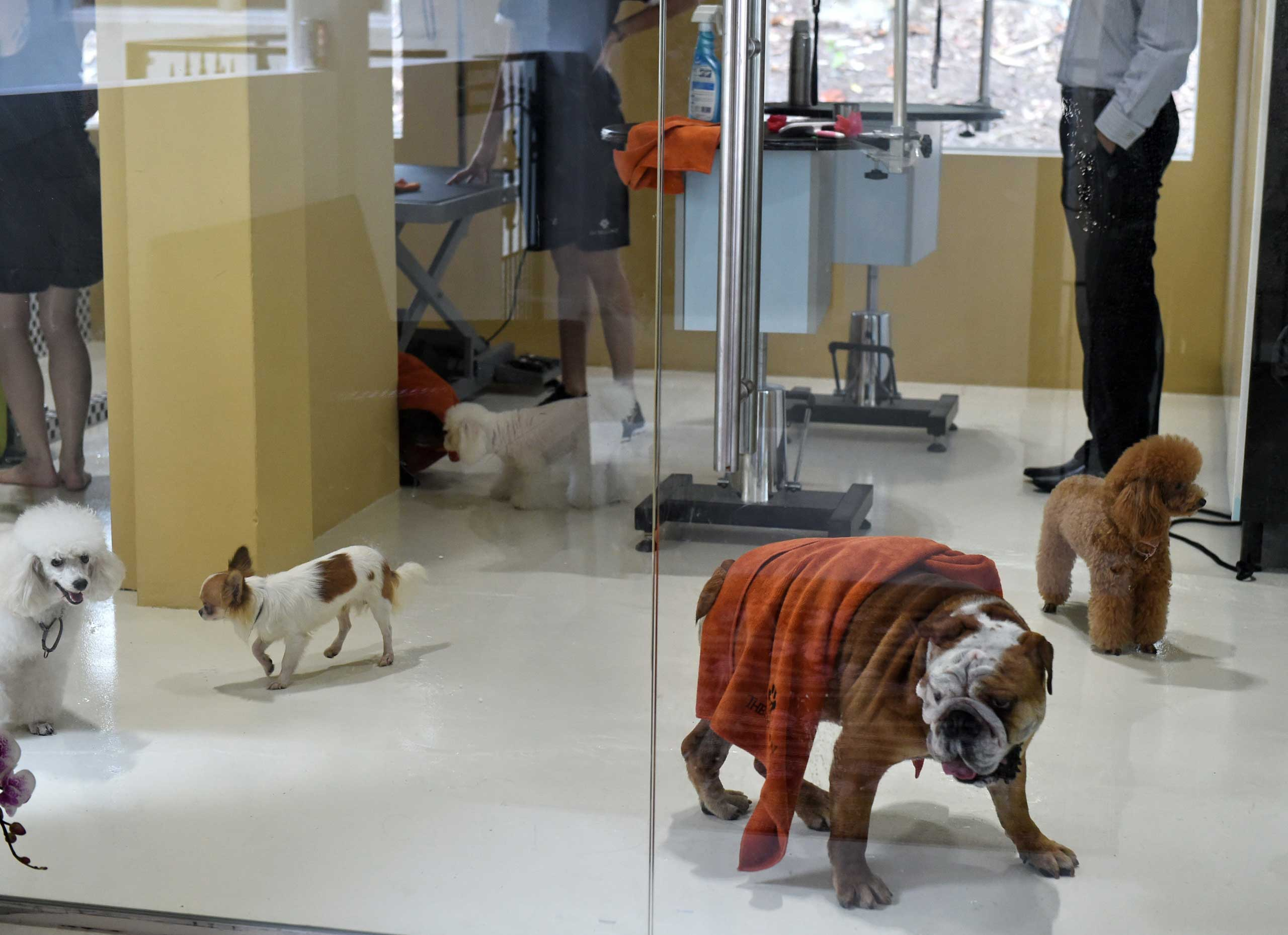Dogs trot around at a luxury pet hotel in Singapore, Nov.4, 2014.