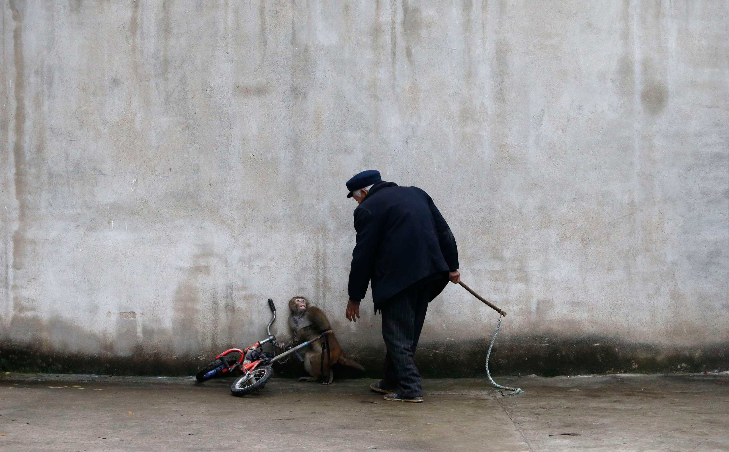 A monkey cowers as its trainer, Qi Defang, approaches during training for a circus in Suzhou, Anhui Province, China, Nov. 29, 2014.