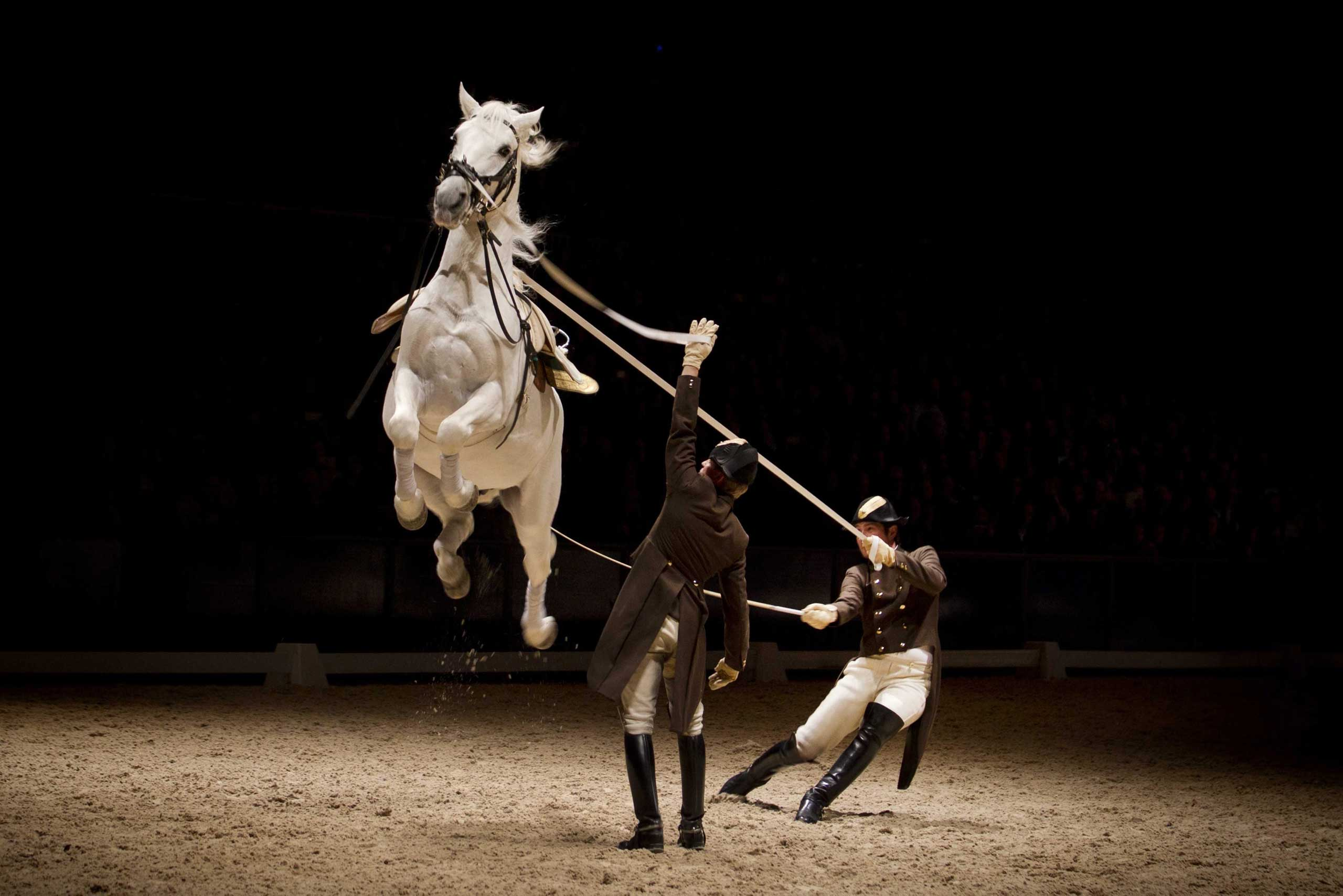 Nov. 29, 2014.  A Lipizzan horse executes a capriole during a show of the Spanish Riding School from Vienna, Austria, at the Ziggo Dome arena in Amsterdam.