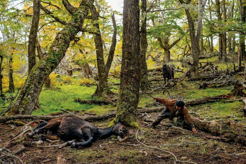 Patagonian Cowboys
