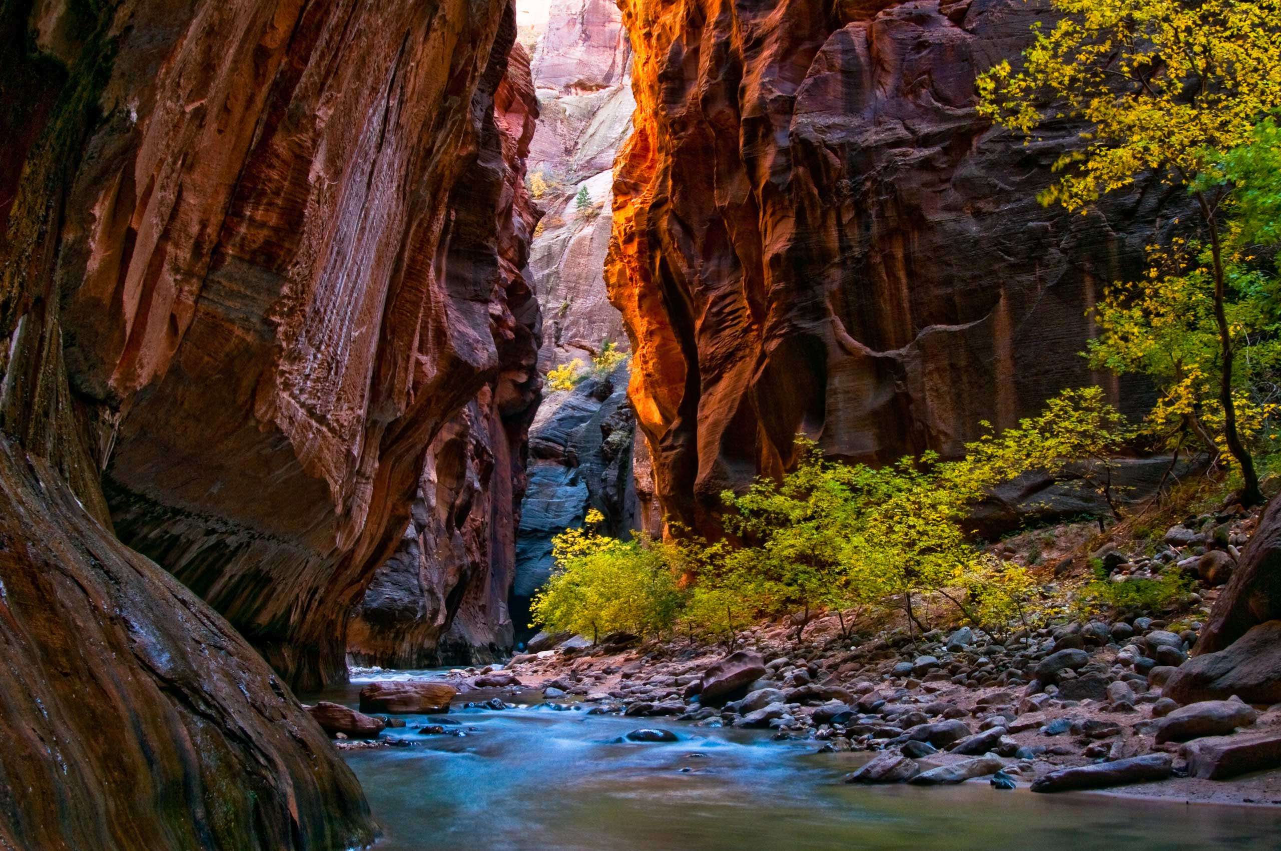 A gorgeous photo of the changing fall colors in Zion National Park (Utah). Kevin Roland captured this shot at one of the park's most popular areas -- the Narrows, a gorge with wall a thousand feet tall.
