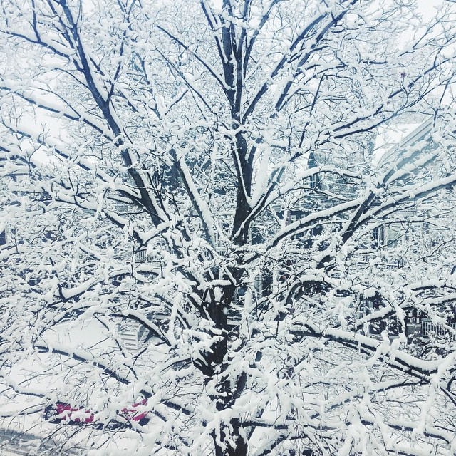 """Amy Hammond posted this image of the snow this morning in Boston, MA to Instagram, writing """"Hello snowyville #SNOW #HAPPIESTVERMONTEREVER"""""""