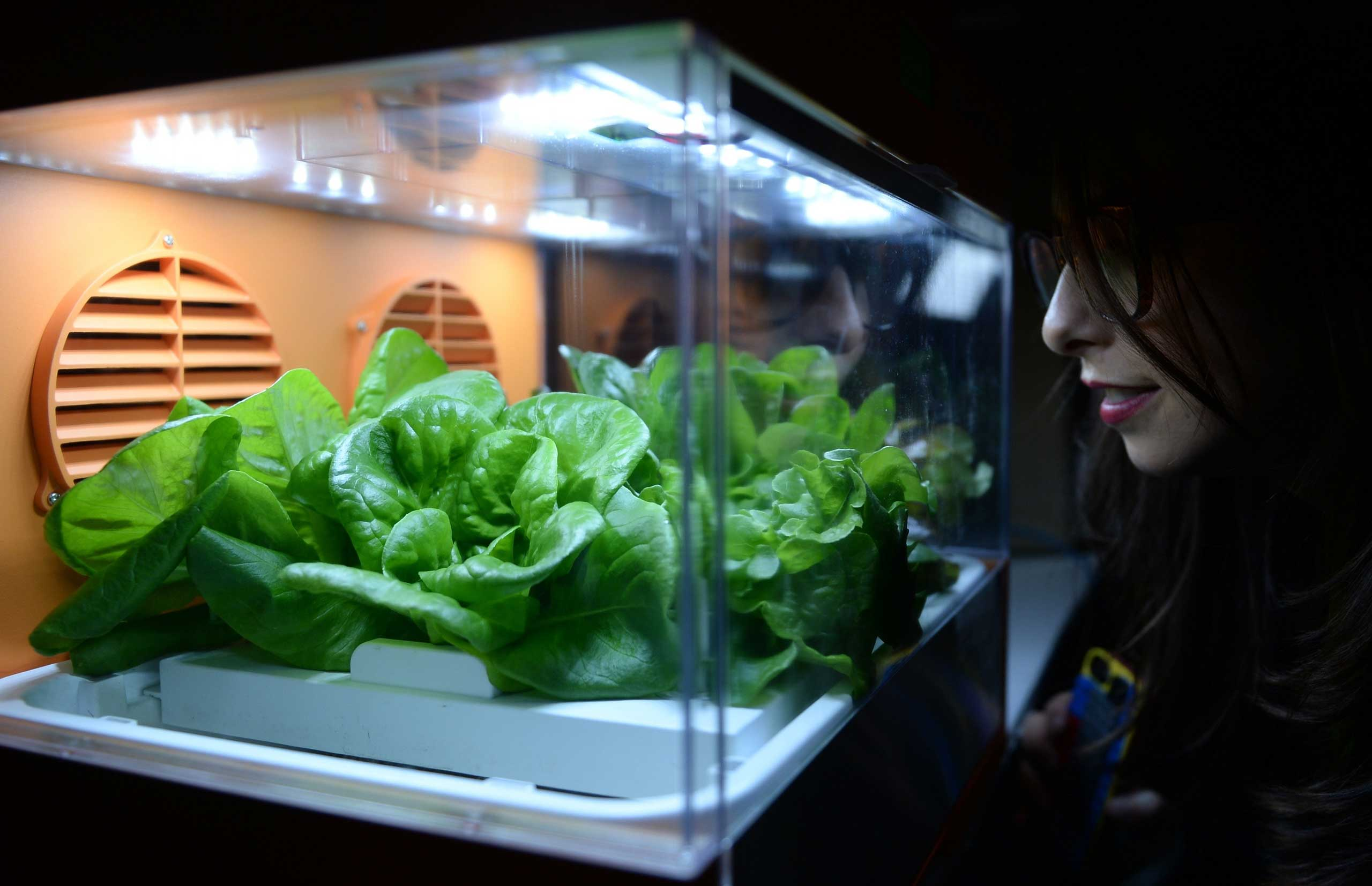 At the 'Unveiled-event' a young woman has a look at salad on Jan. 4, 2015.
