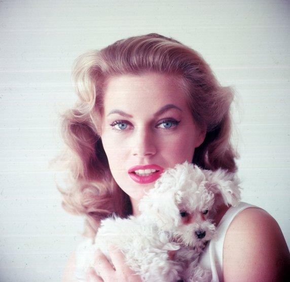 Swedish-born actress Anita Ekberg holding small dog, 1955.