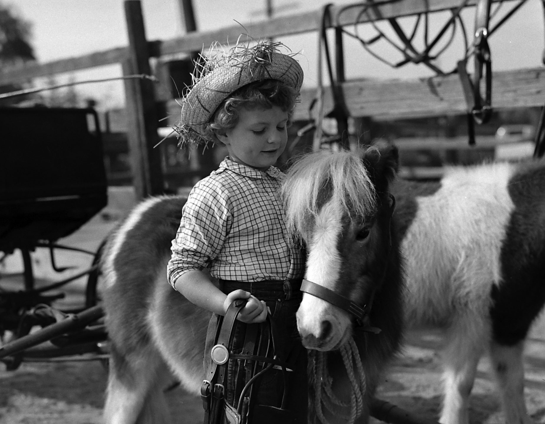 A young girl with Chauncey the miniature horse.