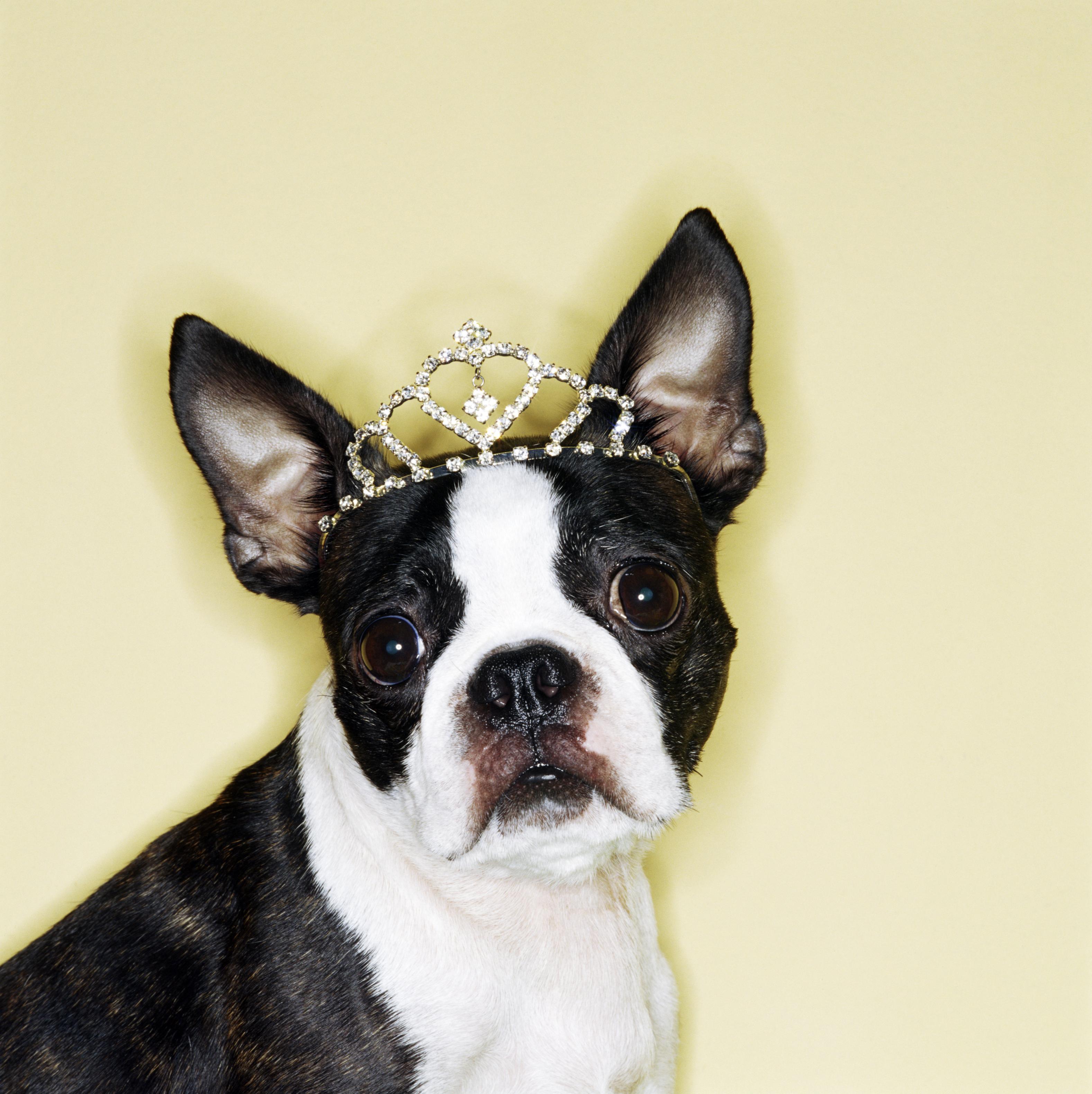 Dog wearing tiara