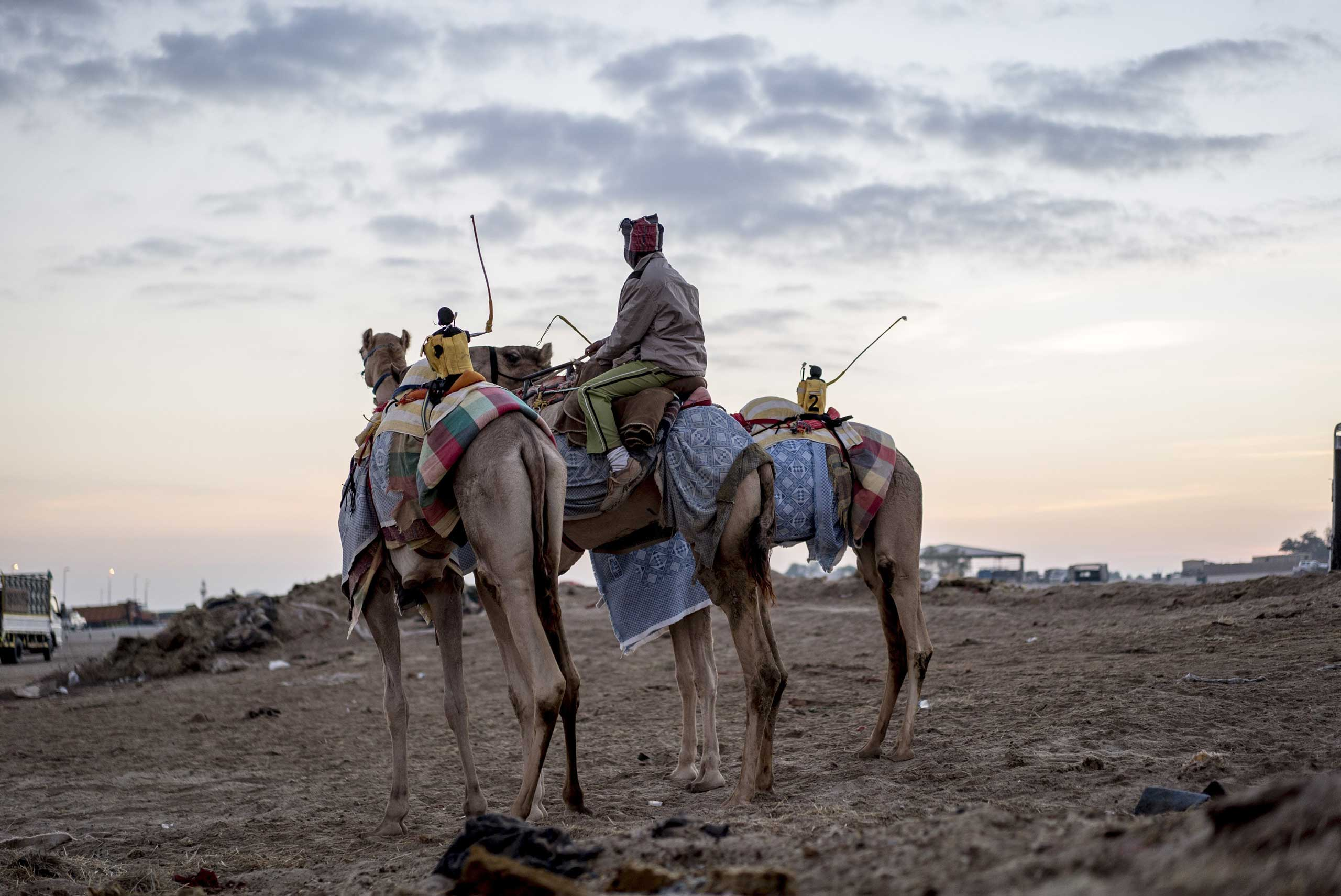 The New York Times: An Ancient Pastime With a Modern TwistA camel rider alongside two camels equipped with robot jockeys before a race in Abu Dhabi, United Arab Emirates, Dec. 3, 2014.