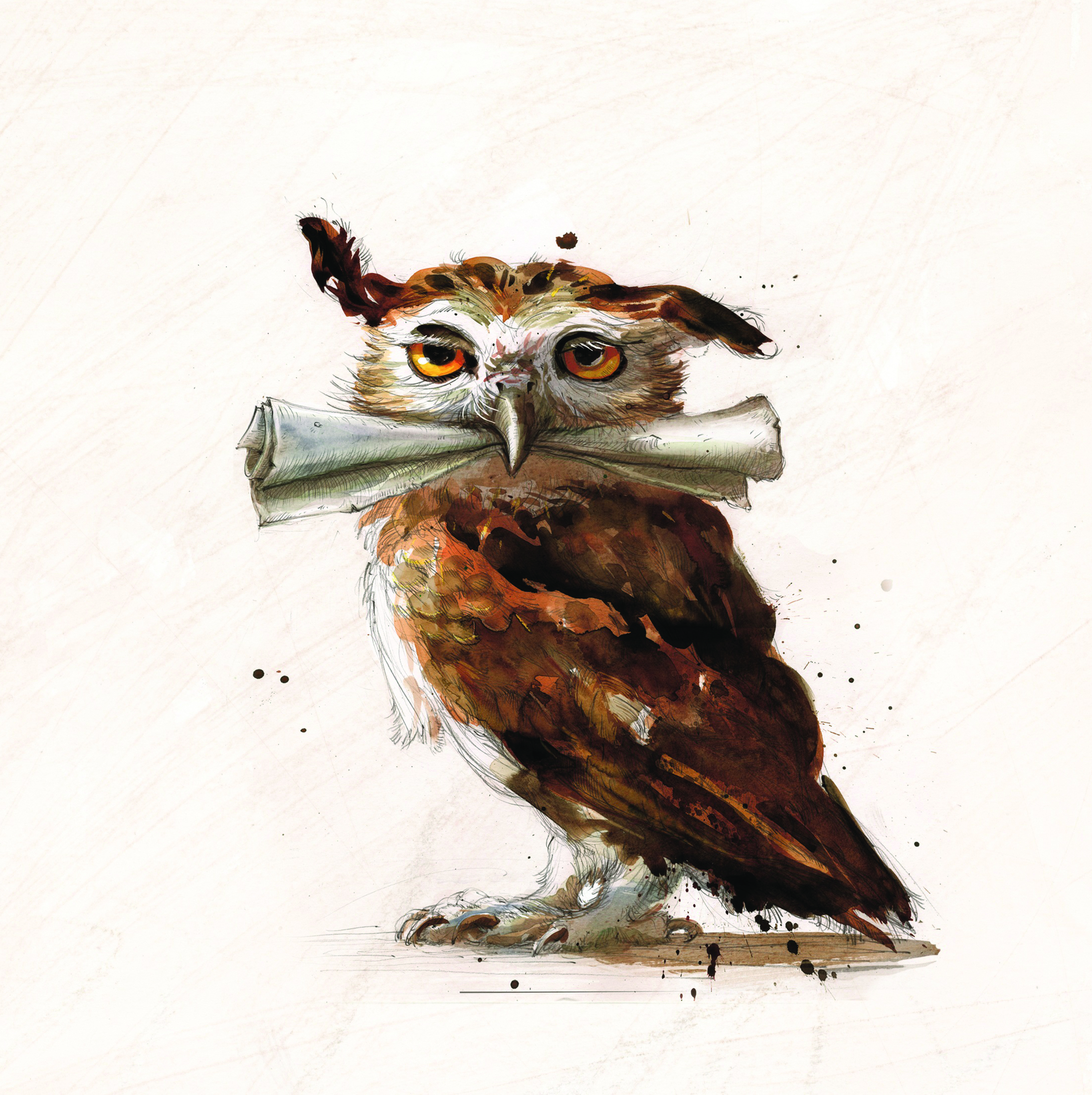 <strong>An owl</strong>
