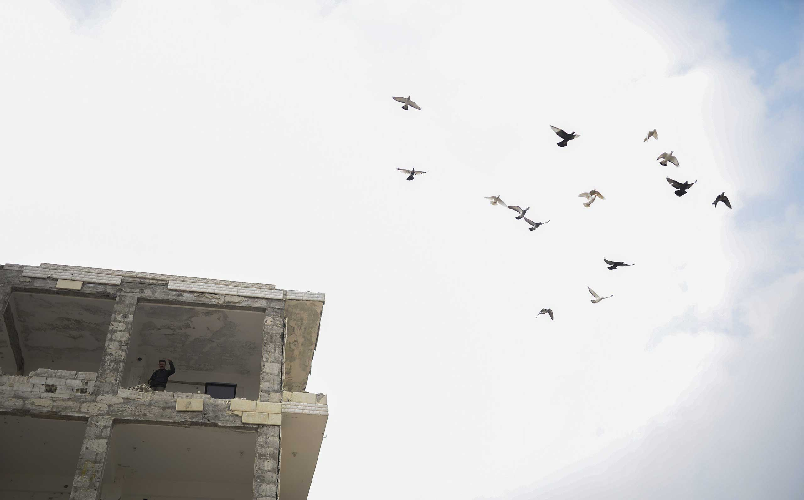 A Kurd stands in a building as pigeons fly over in the center of the Syrian town of Kobani on Jan. 28, 2015.