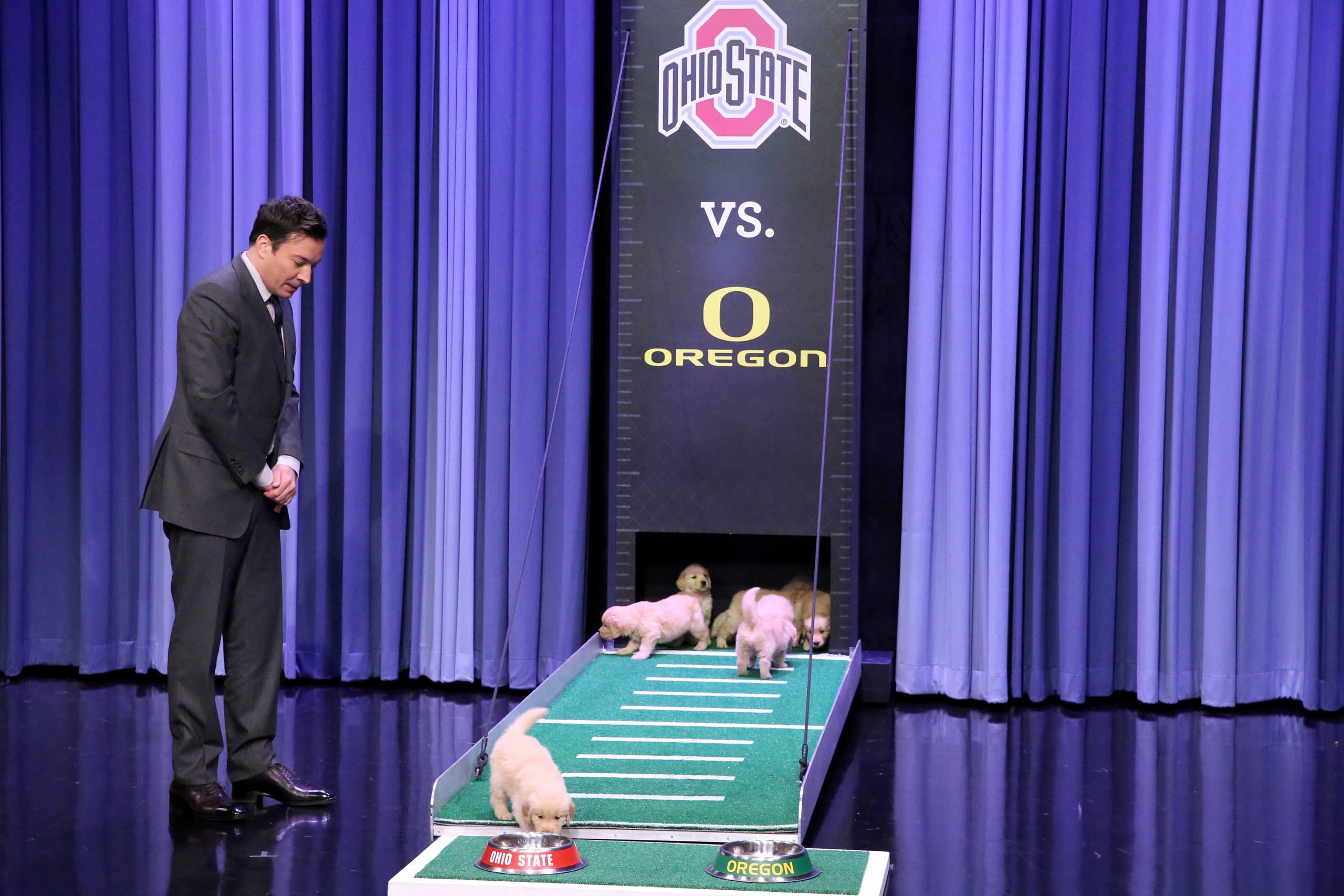 Host Jimmy Fallon during the  Puppies Predict College Championship  segment on January 7, 2015