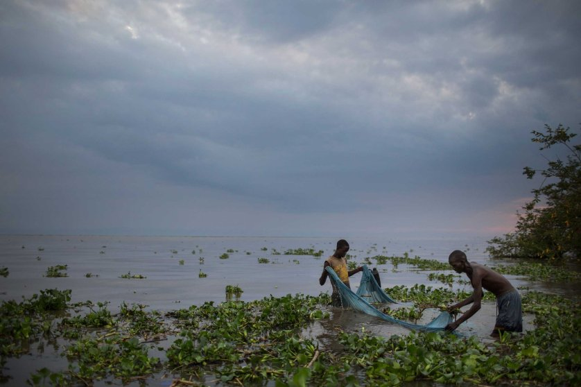 The New York Times: In Africa, Mosquito Nets Are Putting Fish at RiskTwo men use a mosquito net in shallows of Lake Victoria to catch baby catfish to sell as bait, in Kenya, Aug. 2014.