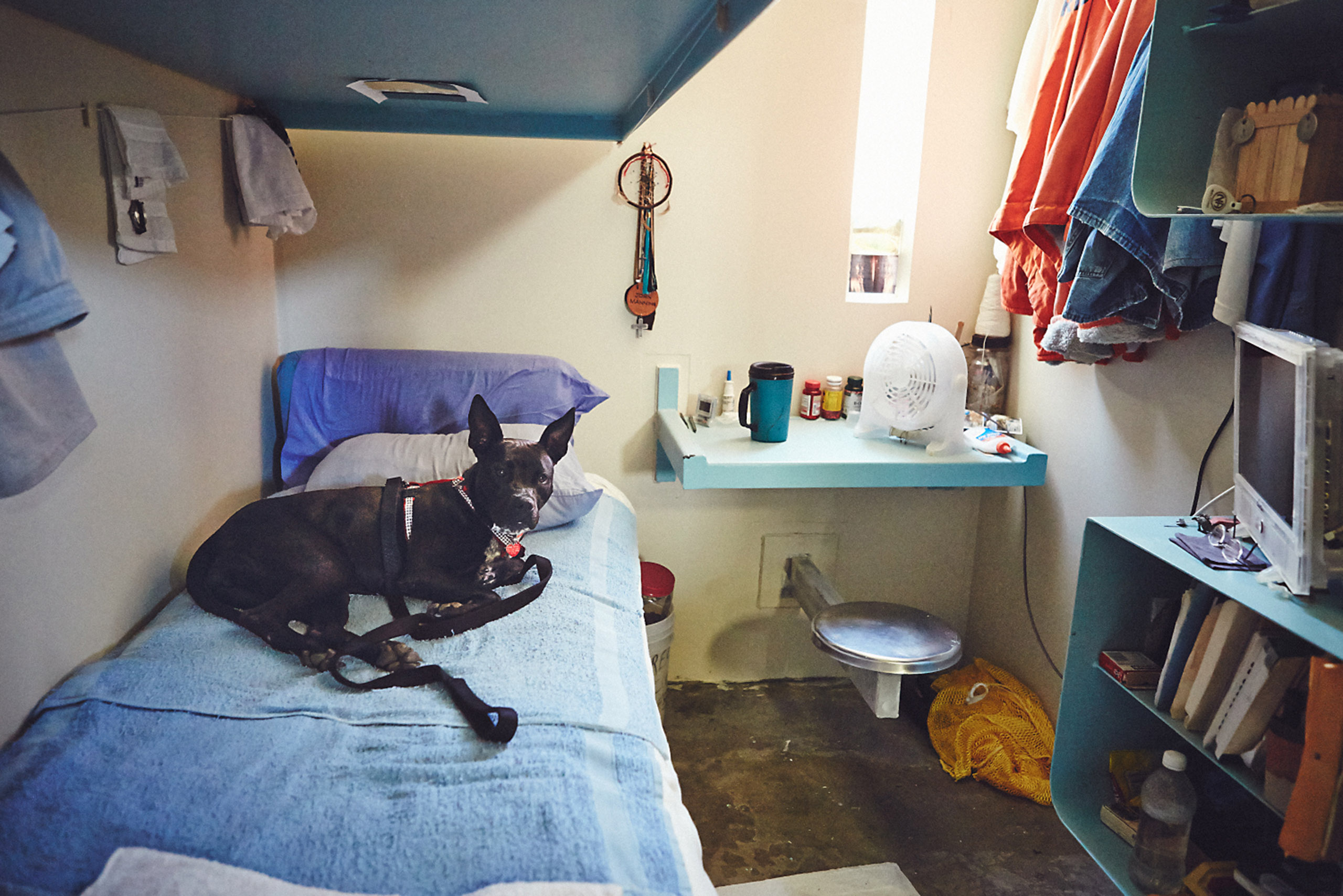 A dog named Shelby sitting inside an inmate's cell at California State Prison.