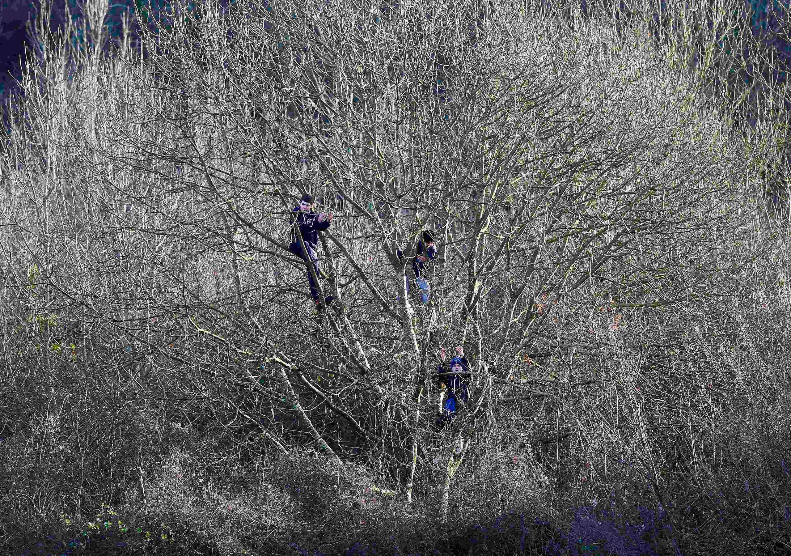 Jan. 4, 2015. Dover Athletic supporters applaud their team from trees outside the ground that overlook the pitch during their English FA Cup third round soccer match against Crystal Palace at Crabble Athletic Ground in Dover, England.