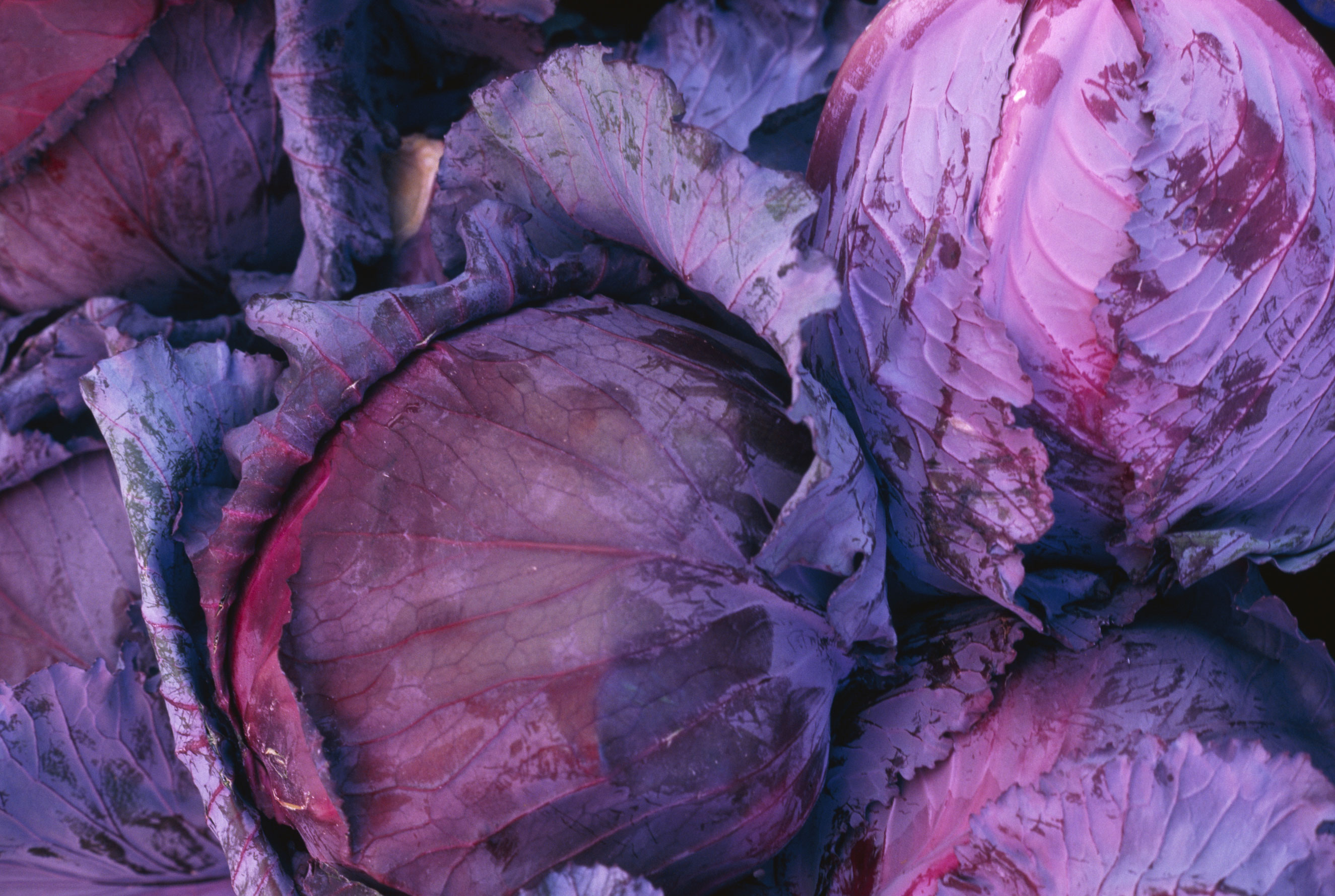 <strong>Cabbage:</strong> It may look like a delicate flower, but some types of cabbage can survive temperatures as low as 26 degrees, Casanova says, making it ideal for a winter harvest.
