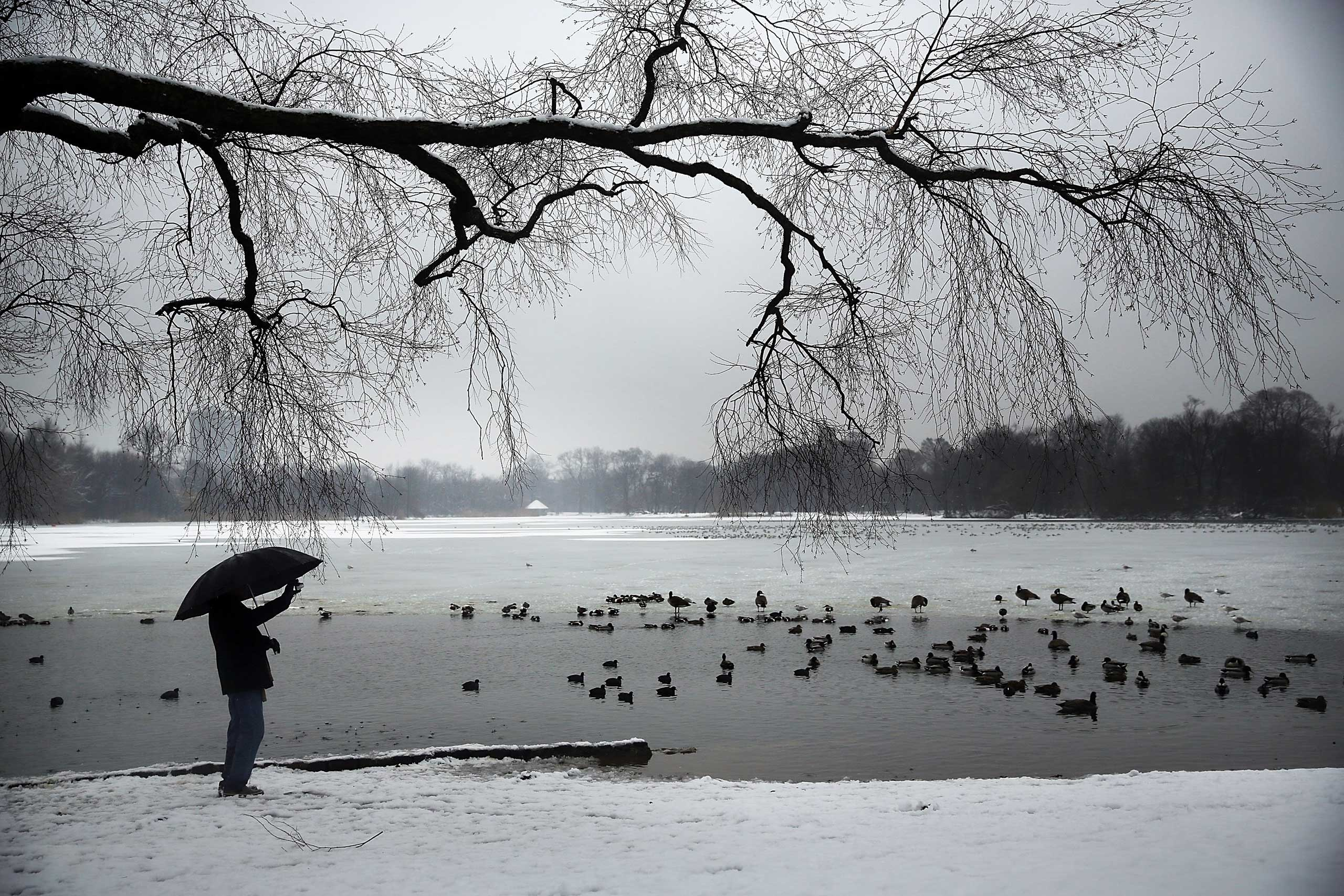 A man takes a picture of ducks and geese at a lake in Brooklyn's Prospect Park following an evening storm on Jan. 24, 2015 in New York City.