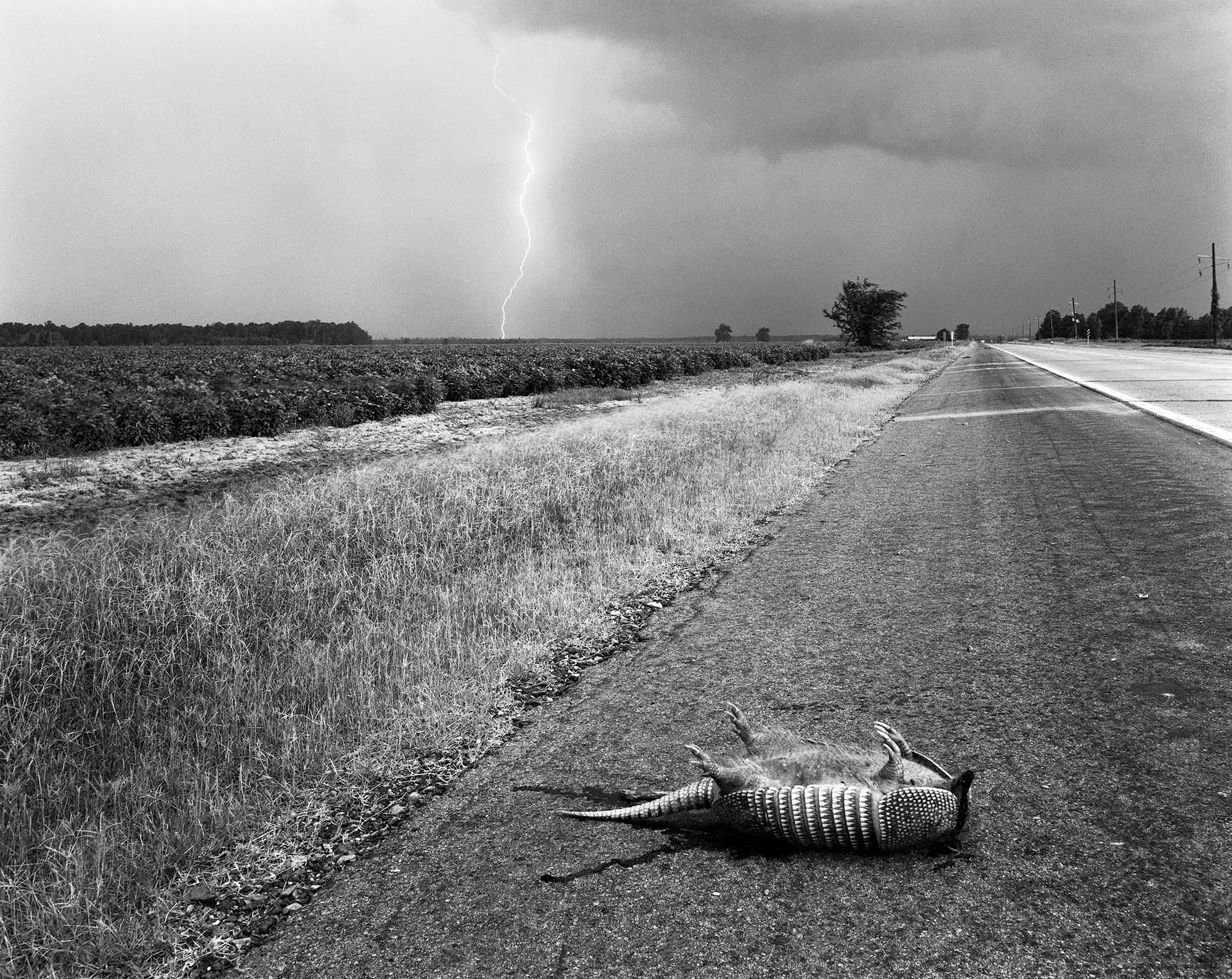 Armadillo, Waterproof., Louisiana, 1986.