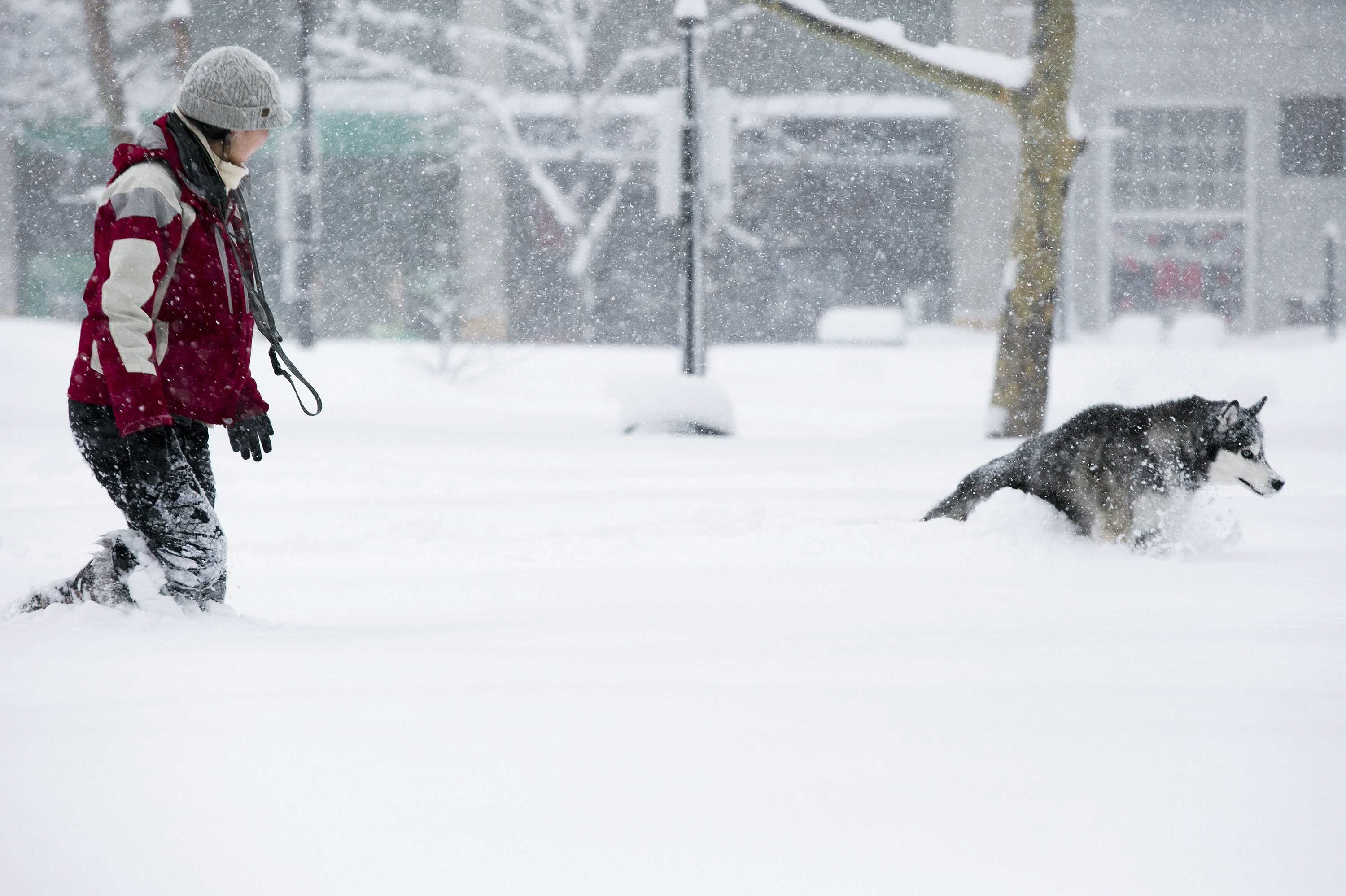 A woman walks her dog through Copley Square during a blizzard in Boston on Feb. 15, 2015.