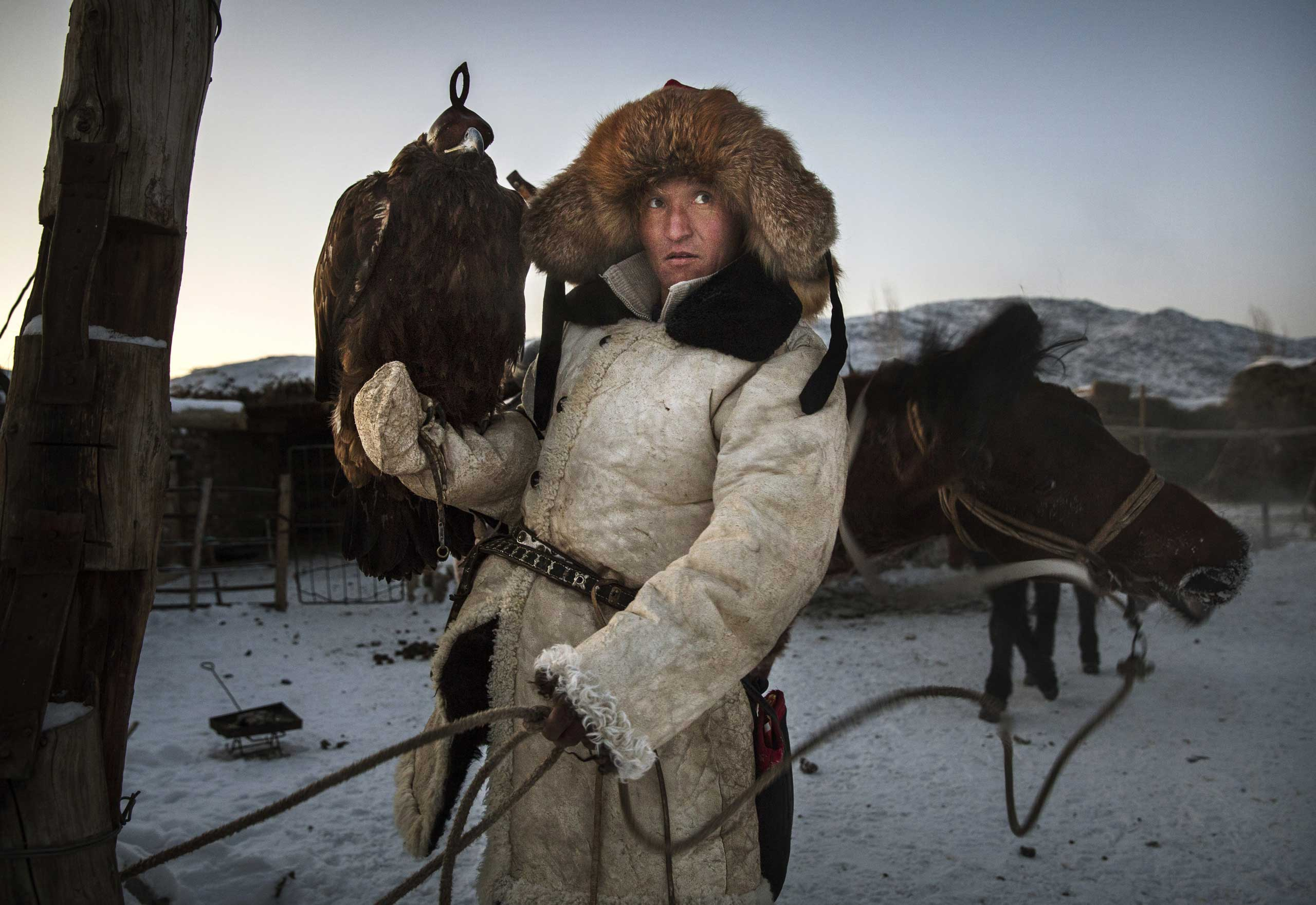 Chinese Kazakh eagle hunter Yermazhan Beysenbay holds his eagle as he ties up his horse after riding before the competition.