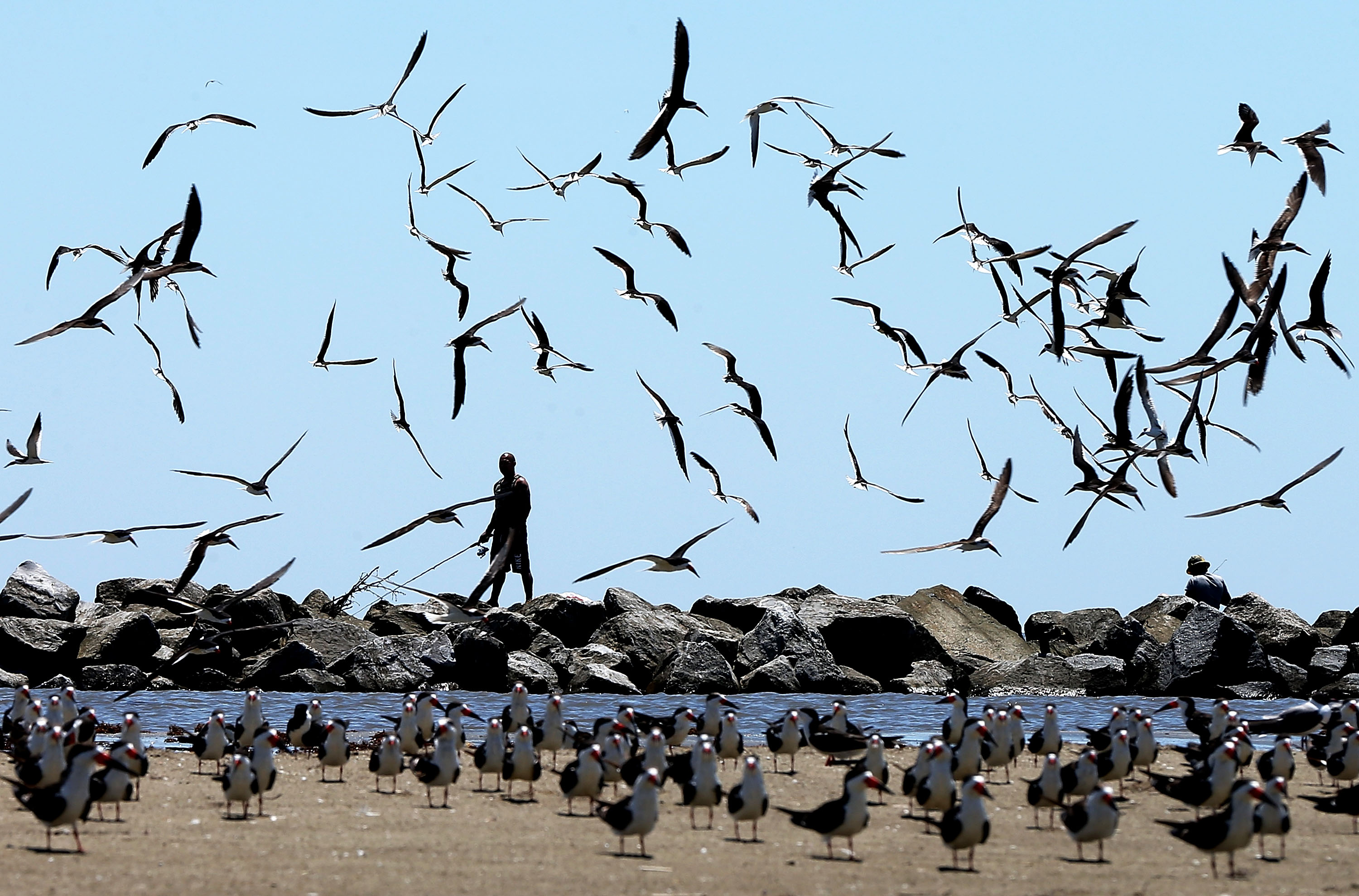 Birds fly over a man fishing on April 19, 2014 in Grand Isle, Louisiana, days after a BP  announcement that it is ending its  active cleanup  on the Louisiana coast from the Deepwater Horizon oil spill.