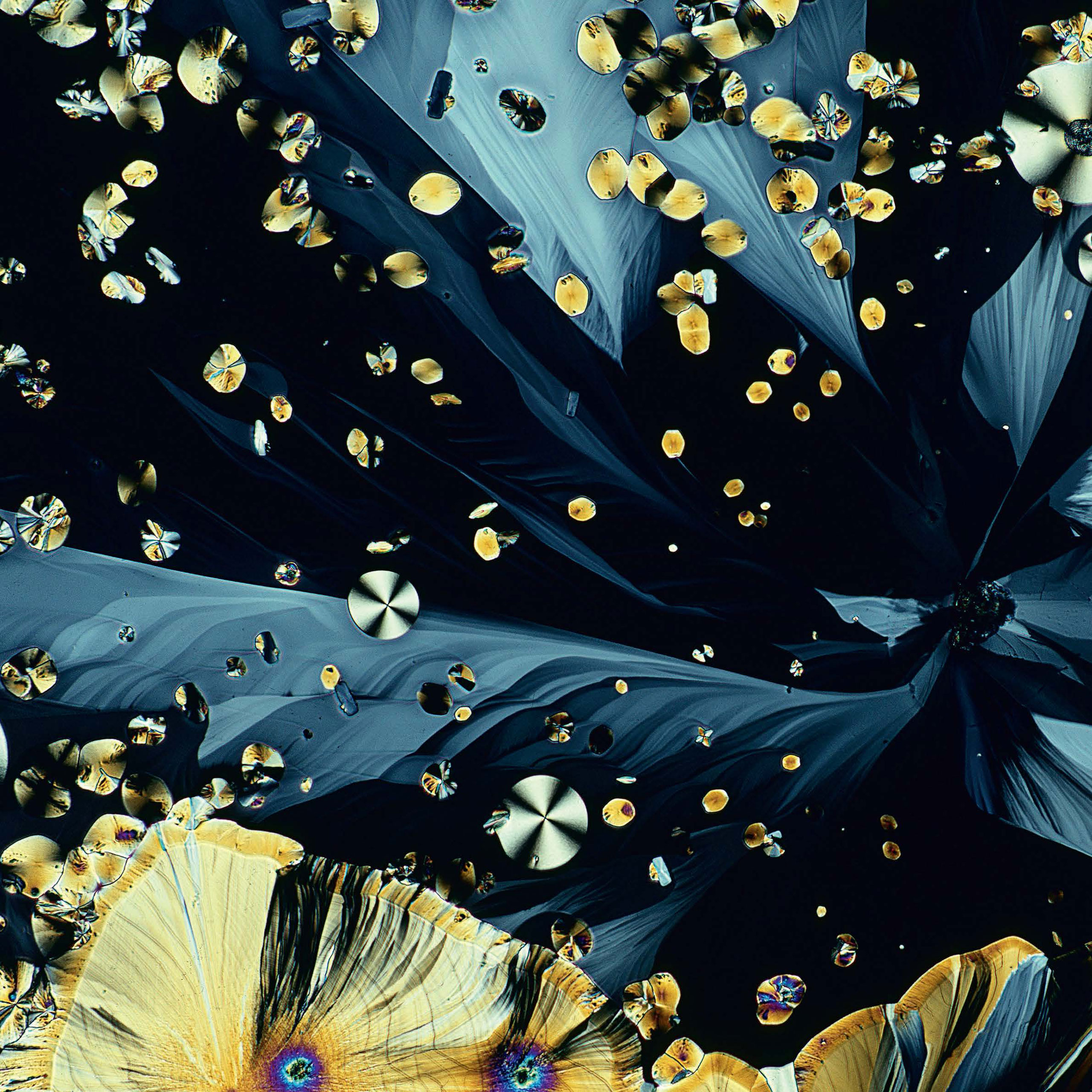 <b>Melatonin crystals</b> (polarized light micrograph)