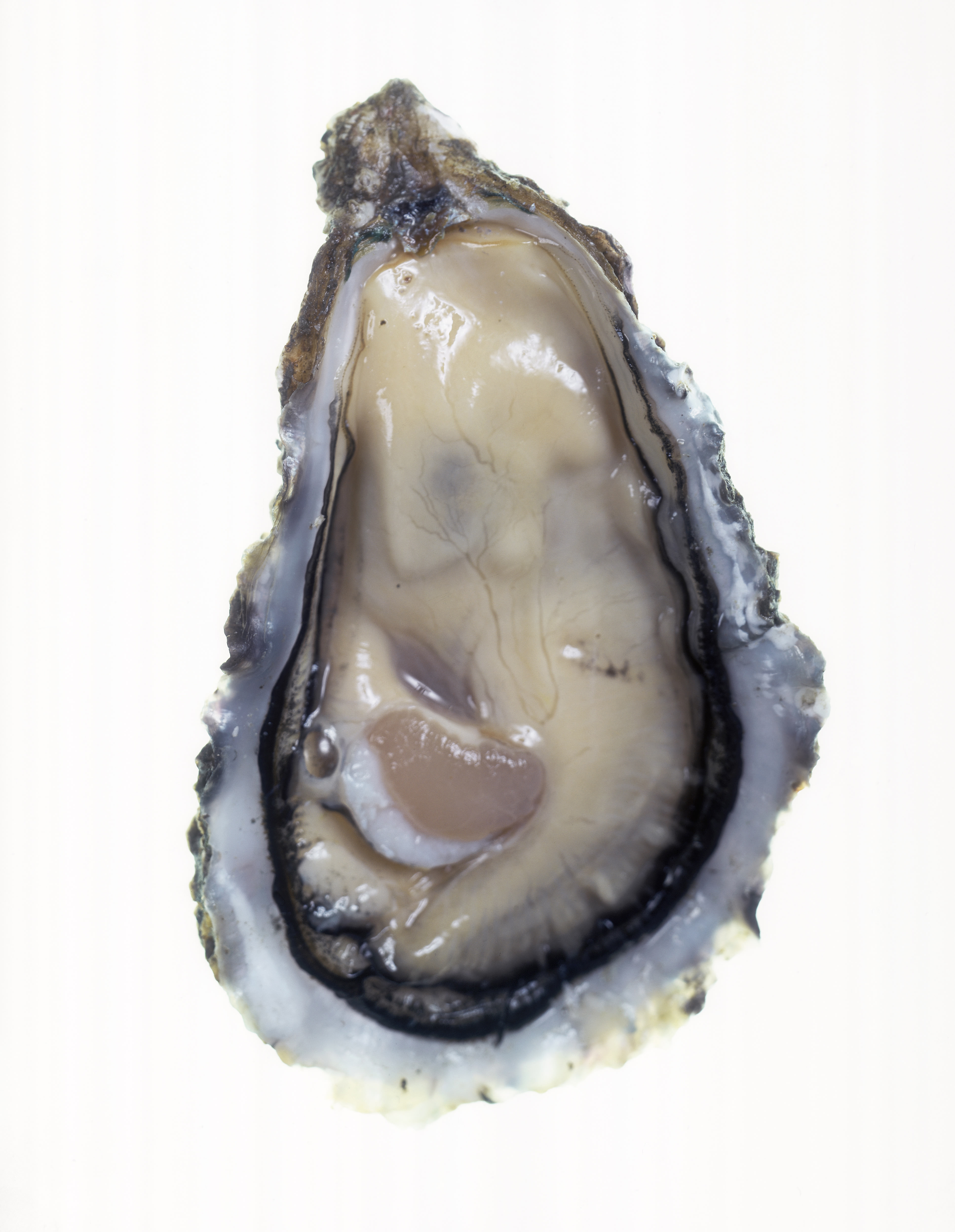 Oysters have long been considered an aphrodisiac, for both texture and shape