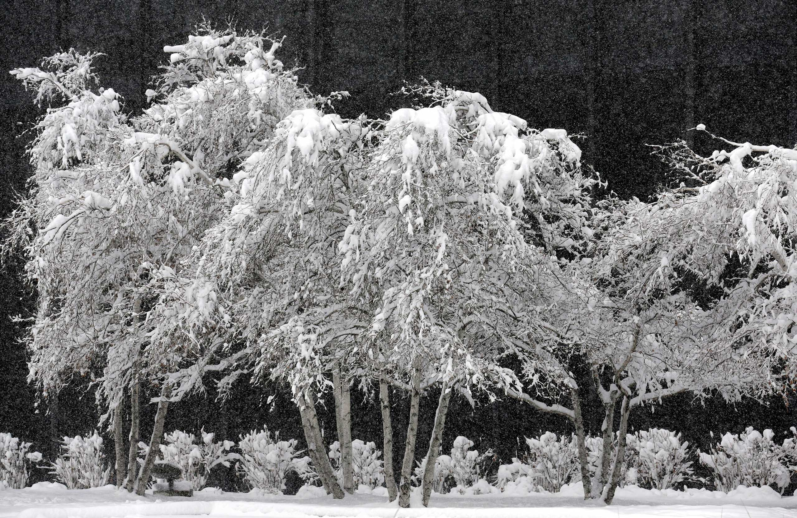 Feb. 1, 2015. Snow covers trees at O'Hare International Airport in Chicago. The first major winter storm of the year is bearing down on the Chicago region, bringing with it blizzard conditions of heavy snow and strong winds.
