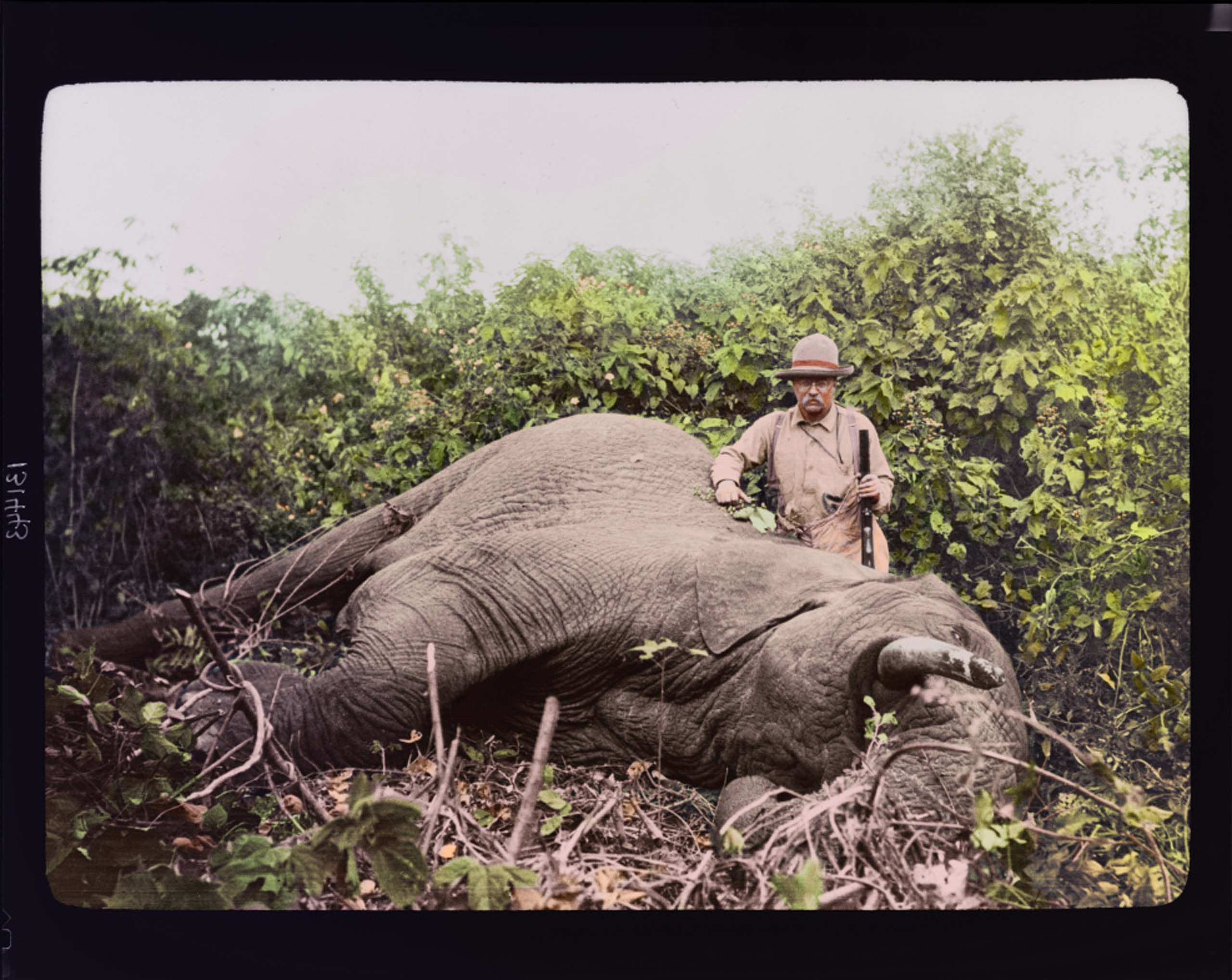 Col. Theodore Roosevelt with a dead elephant at Meru, Kenya.                                                                      <i>The Siena Research Institute (SRI) at Siena College often releases complex expert rankings of all U.S. Presidents. In 2010, the SRI Survey Ranked Roosevelt the #2 President of All Time. Roosevelt took top marks in the survey's categories for 'Imagination,' 'Willingness to Take Risks', 'Court Appointments' and 'Intelligence.'</i>