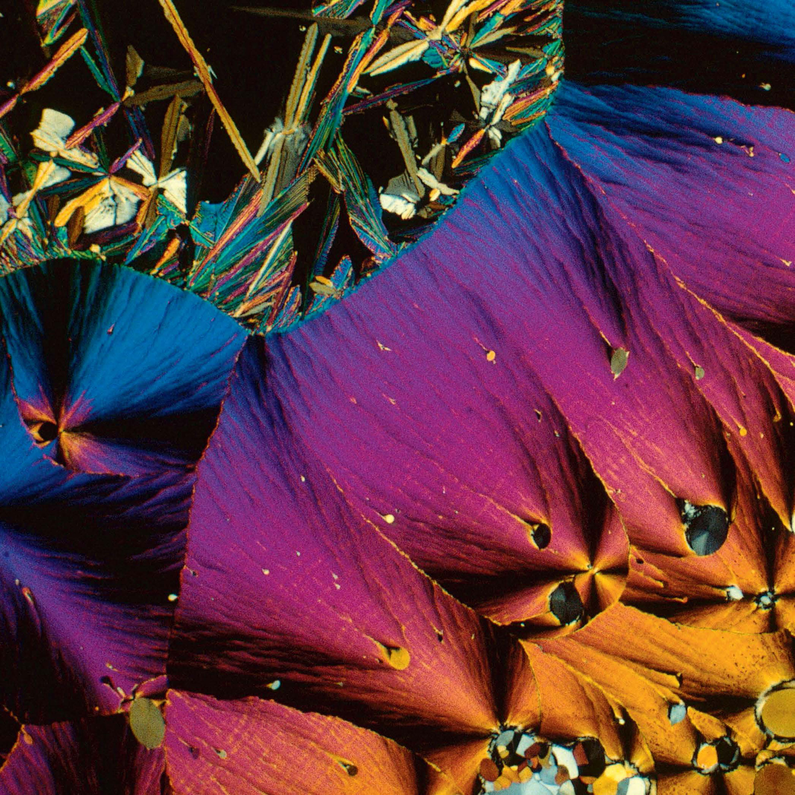 <b>Serotonin crystals</b> (polarized light micrograph)