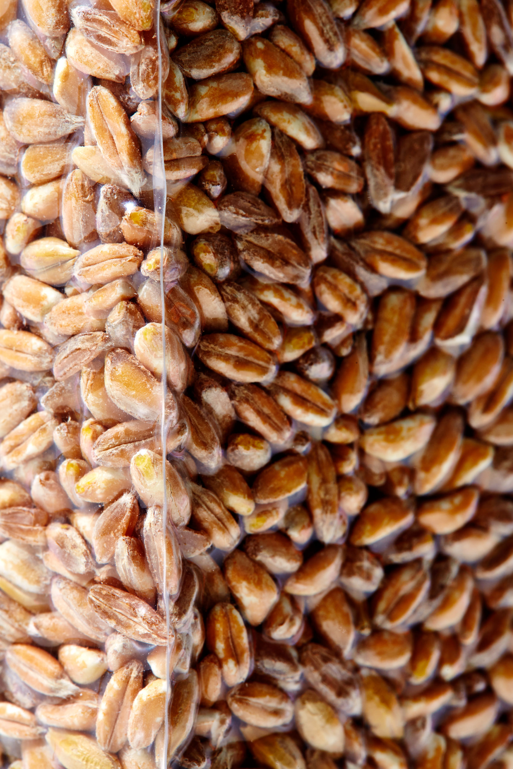 healthiest foods, health food, diet, nutrition, time.com stock, farro, grains