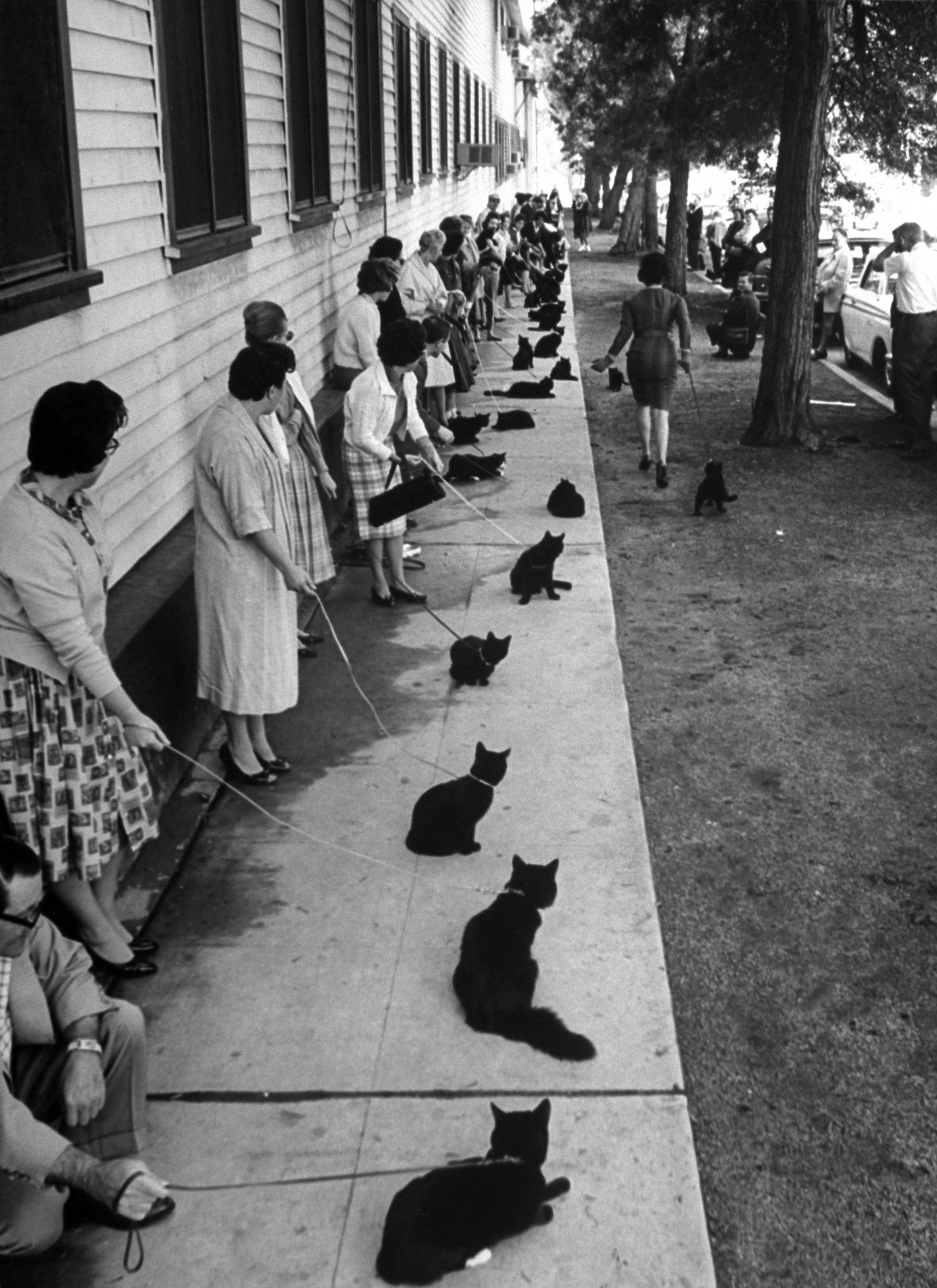 <b>Caption from LIFE.</b> Who's afraid of all these black cats?