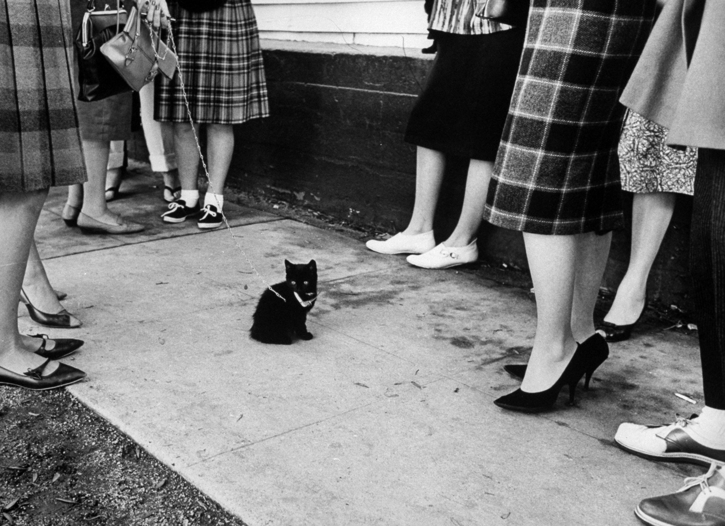Black cats auditioning for a role in <i>The Black Cat,</i> a new version of the Edgar Allan Poe classic in 1961.