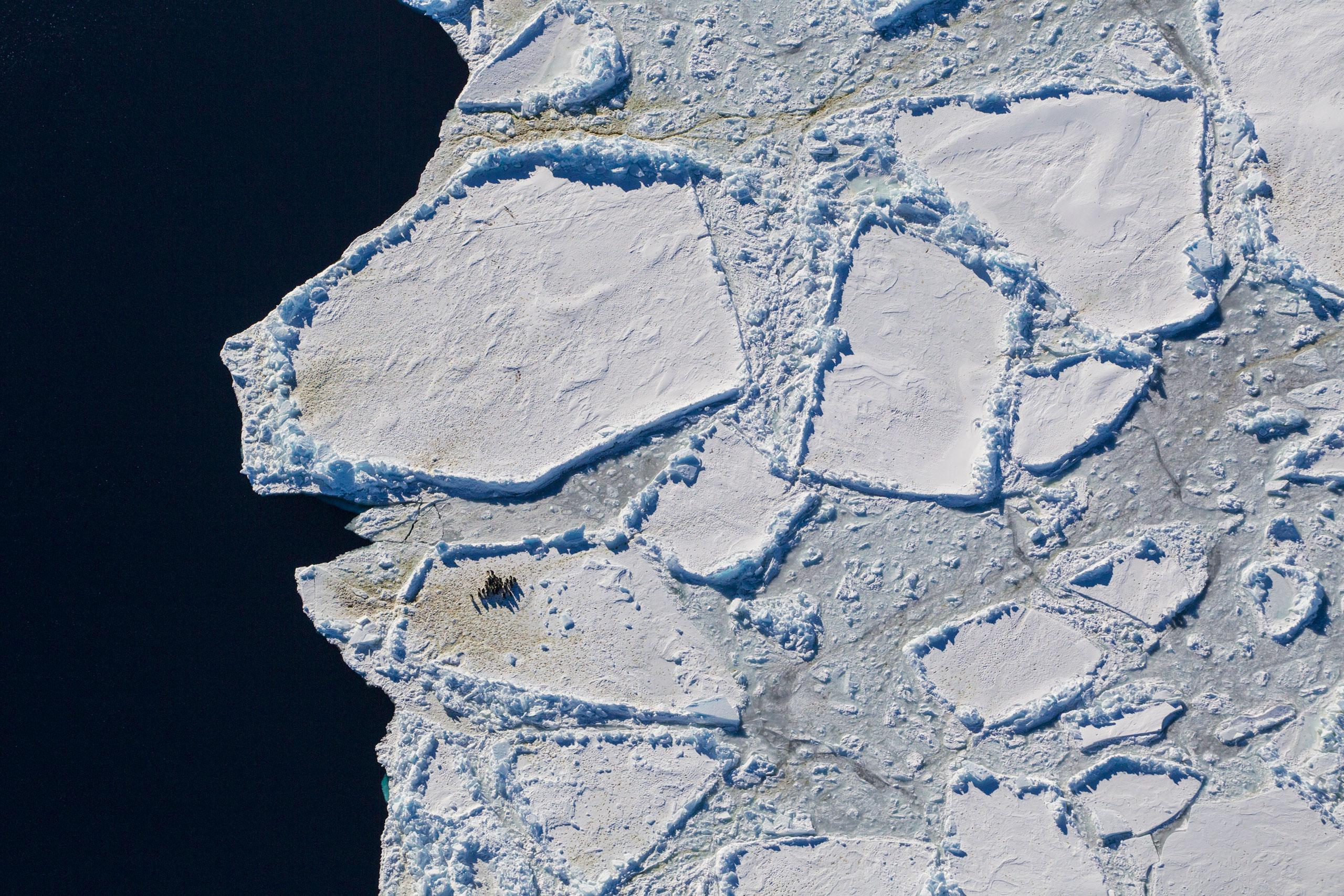 Emperor penguins on an ice edge in Antarctica.