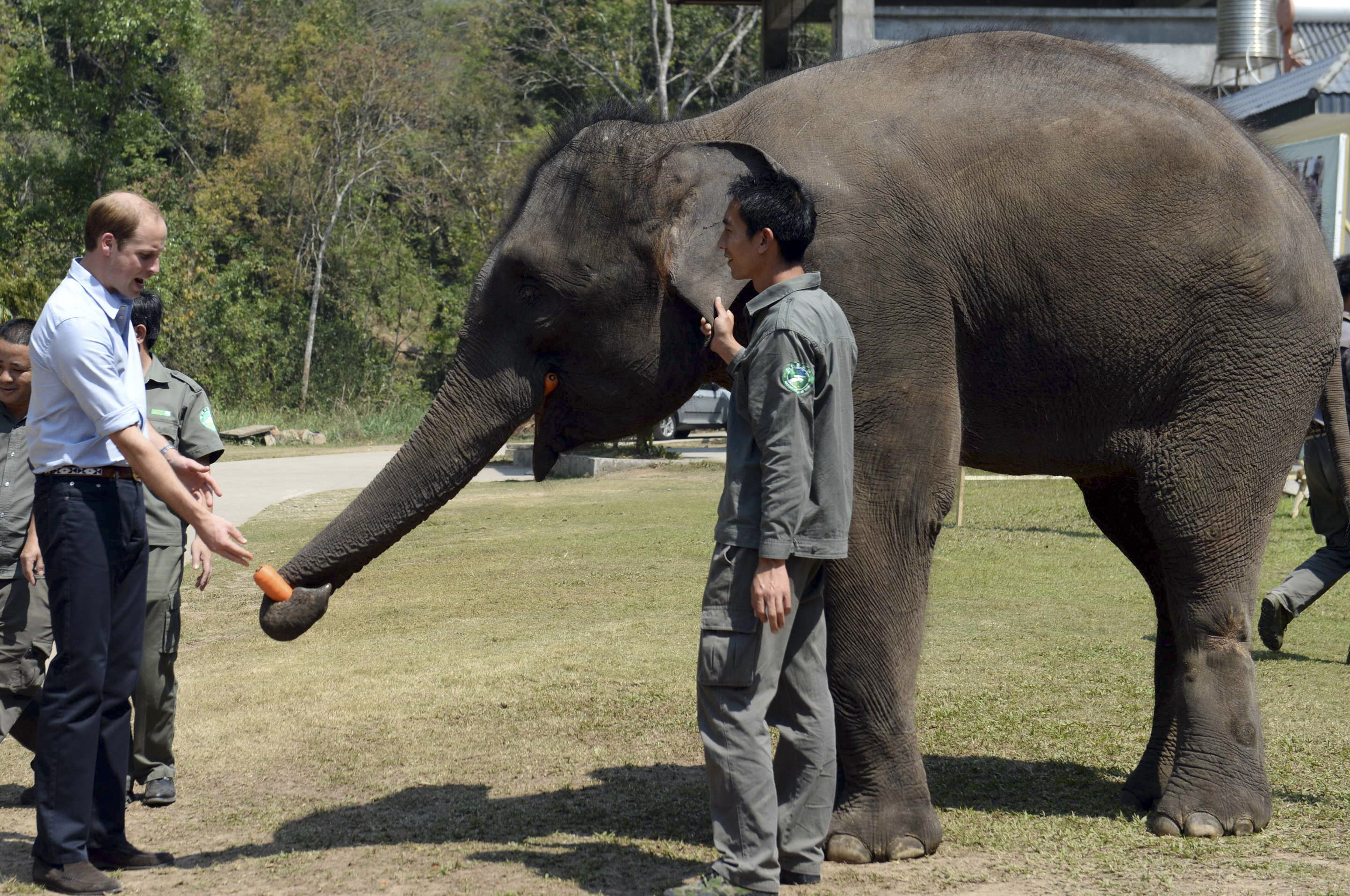 Britain's Prince William feeds Ran Ran, a 13-year-old female elephant in southwest China's Yunnan province on March 4, 2015.