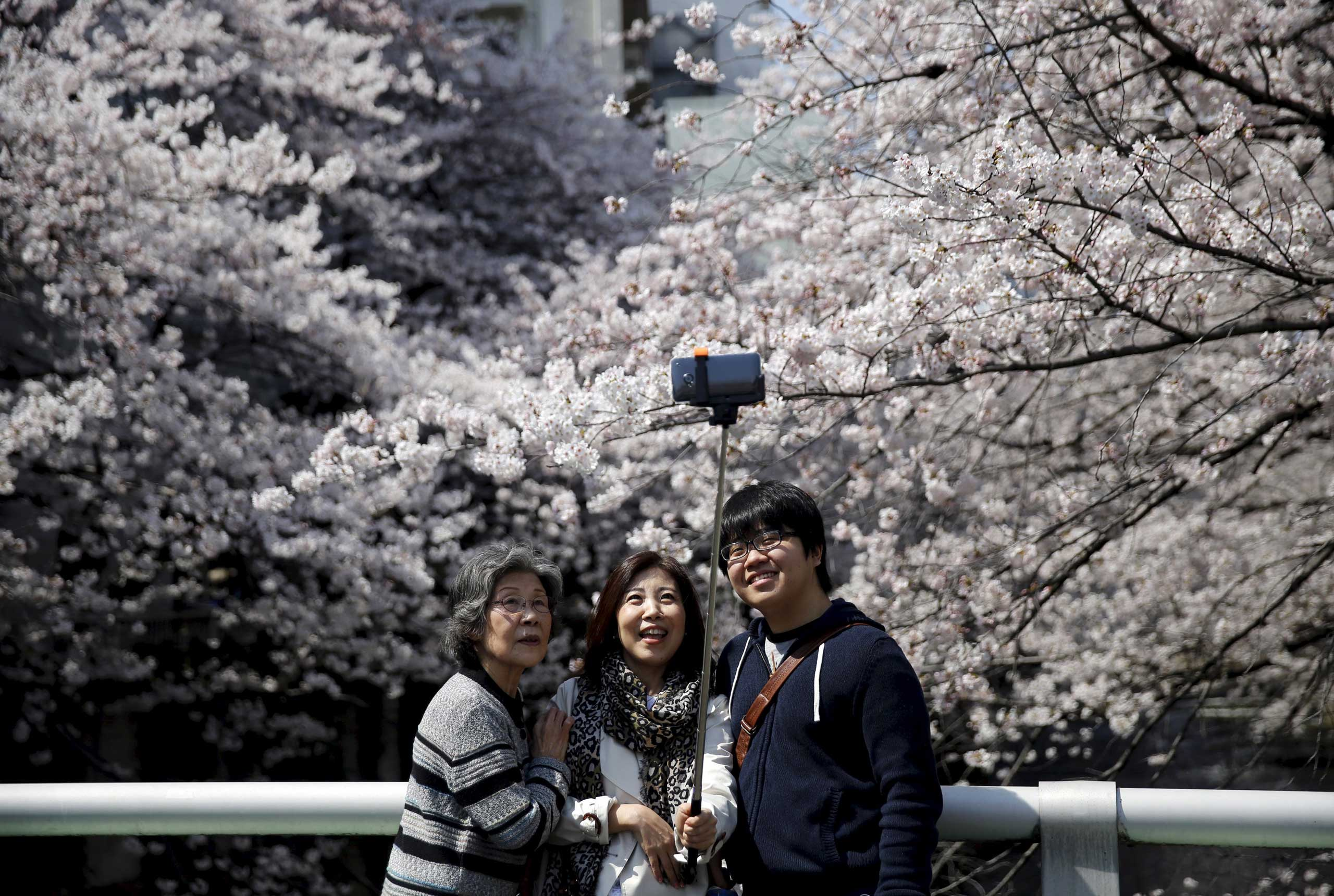People take a selfie with cherry blossoms in full bloom in Tokyo, March 30, 2015.