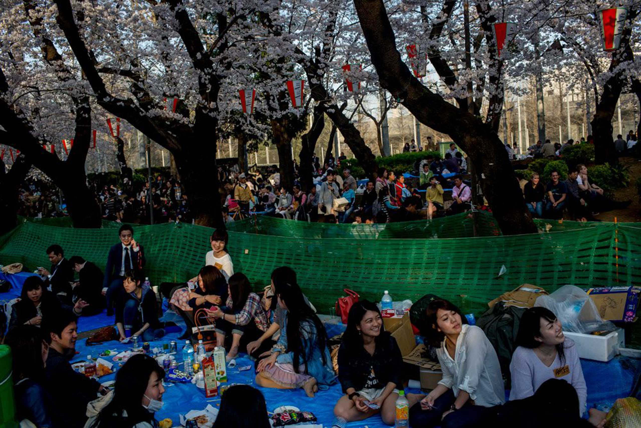 People take part in ' Hanami' or Flower-viewing parties under cherry blossom trees in full bloom in Ueno Park in Tokyo on March 30, 2015.