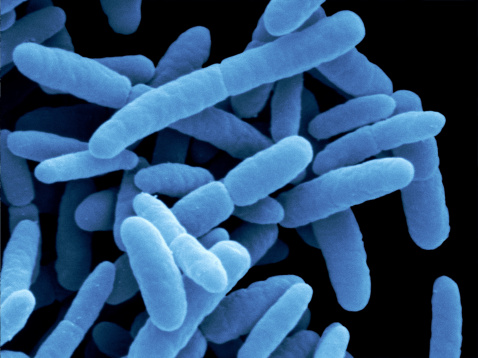 Escherichia coli bacteria by scanning electron microscopy (SEM).